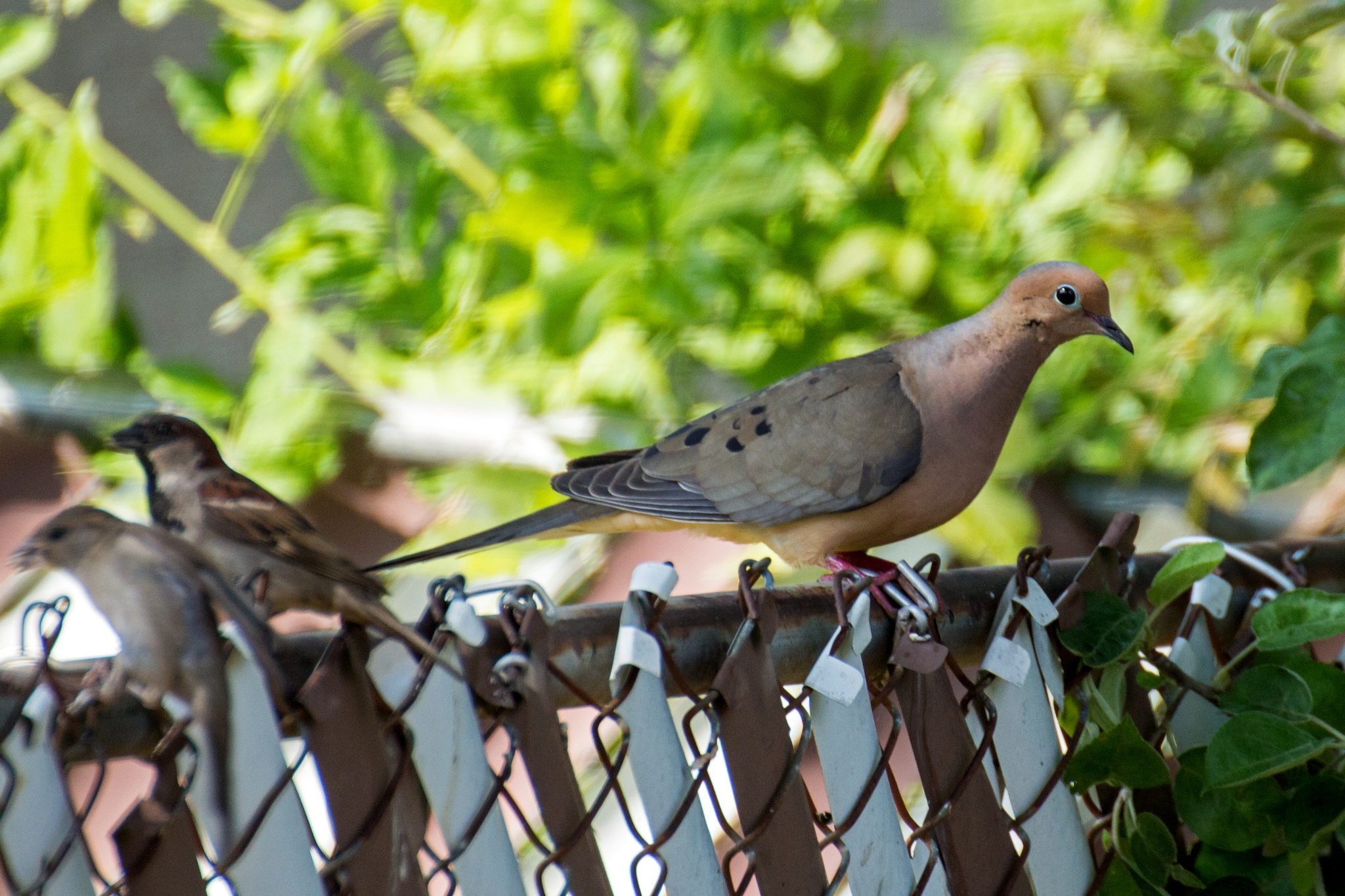On the Fence by Judy Florio