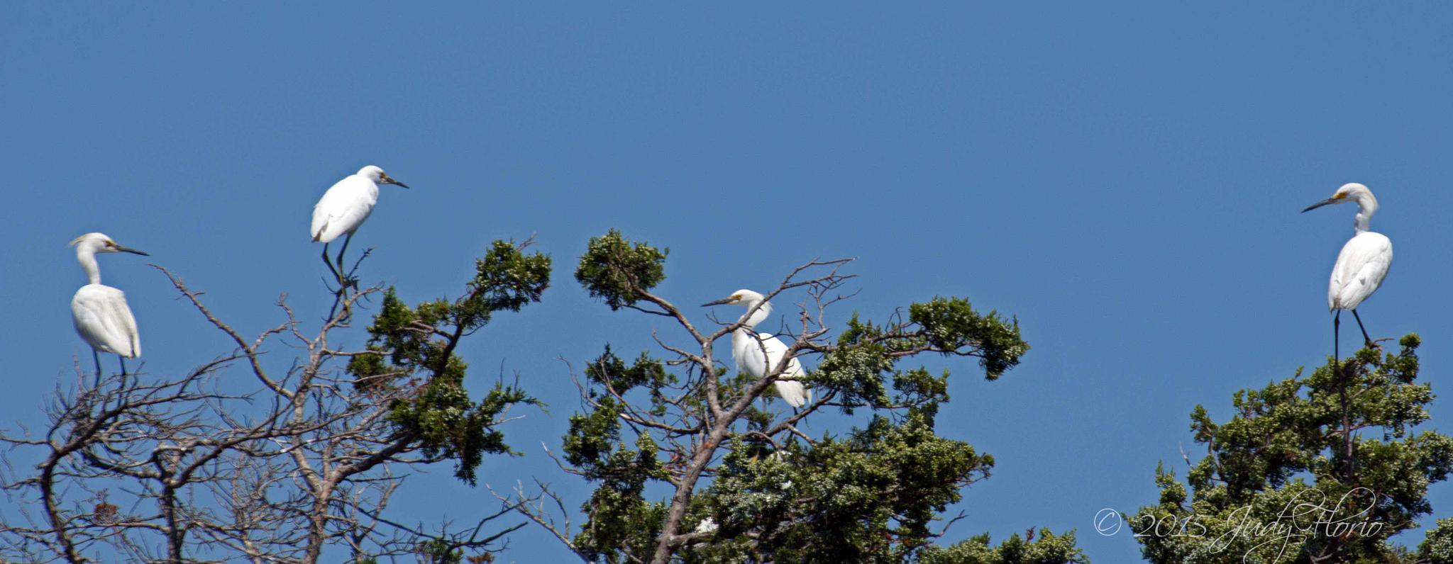 An Egret Convention by Judy Florio