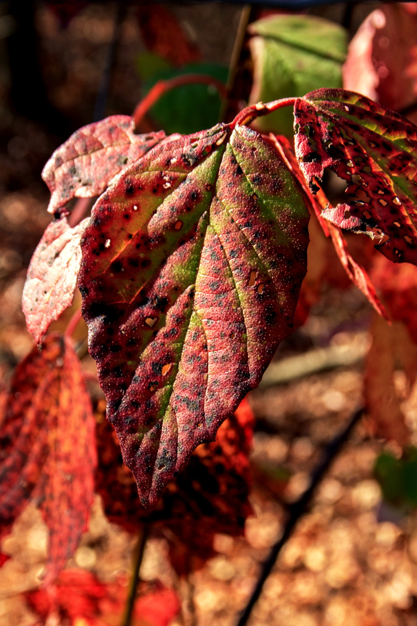 Late autumn color by Judy Florio