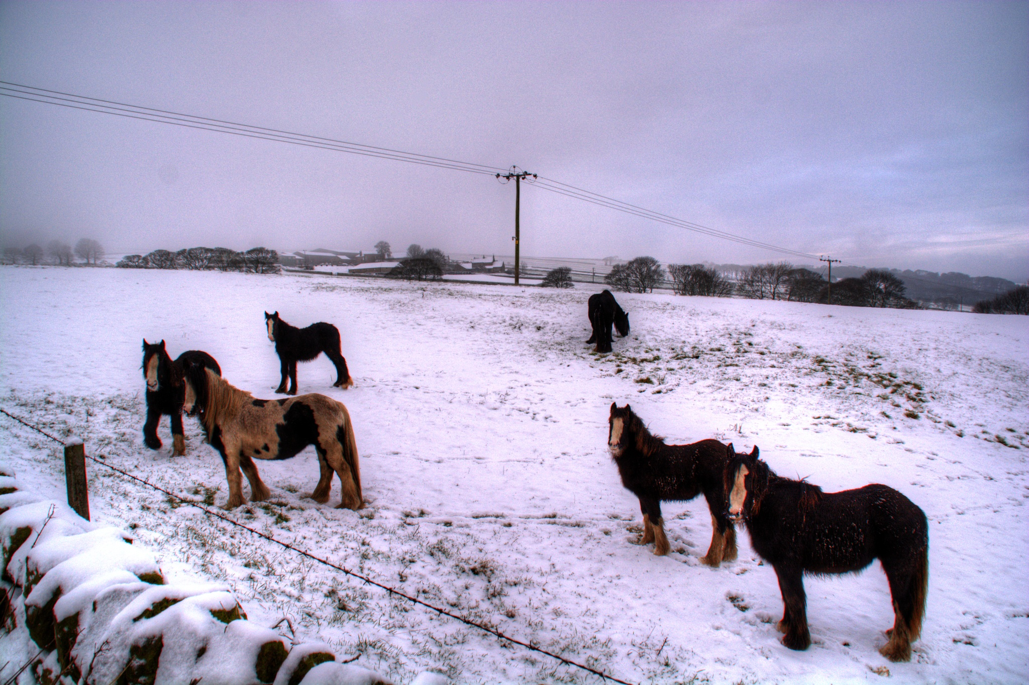 horses in the snow sheffield landscape by Stuart Robertshaw Photography