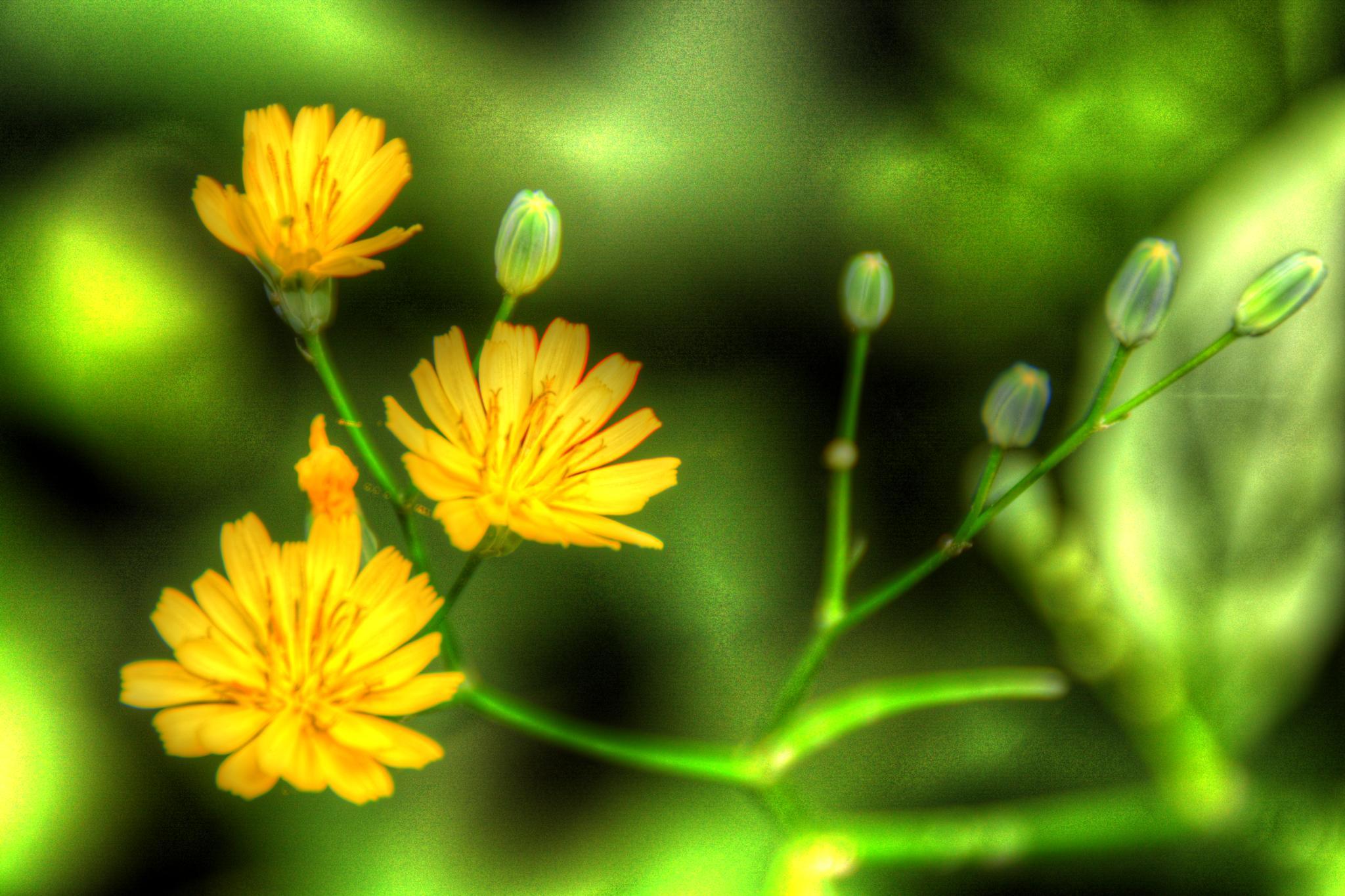 flower by Stuart Robertshaw Photography