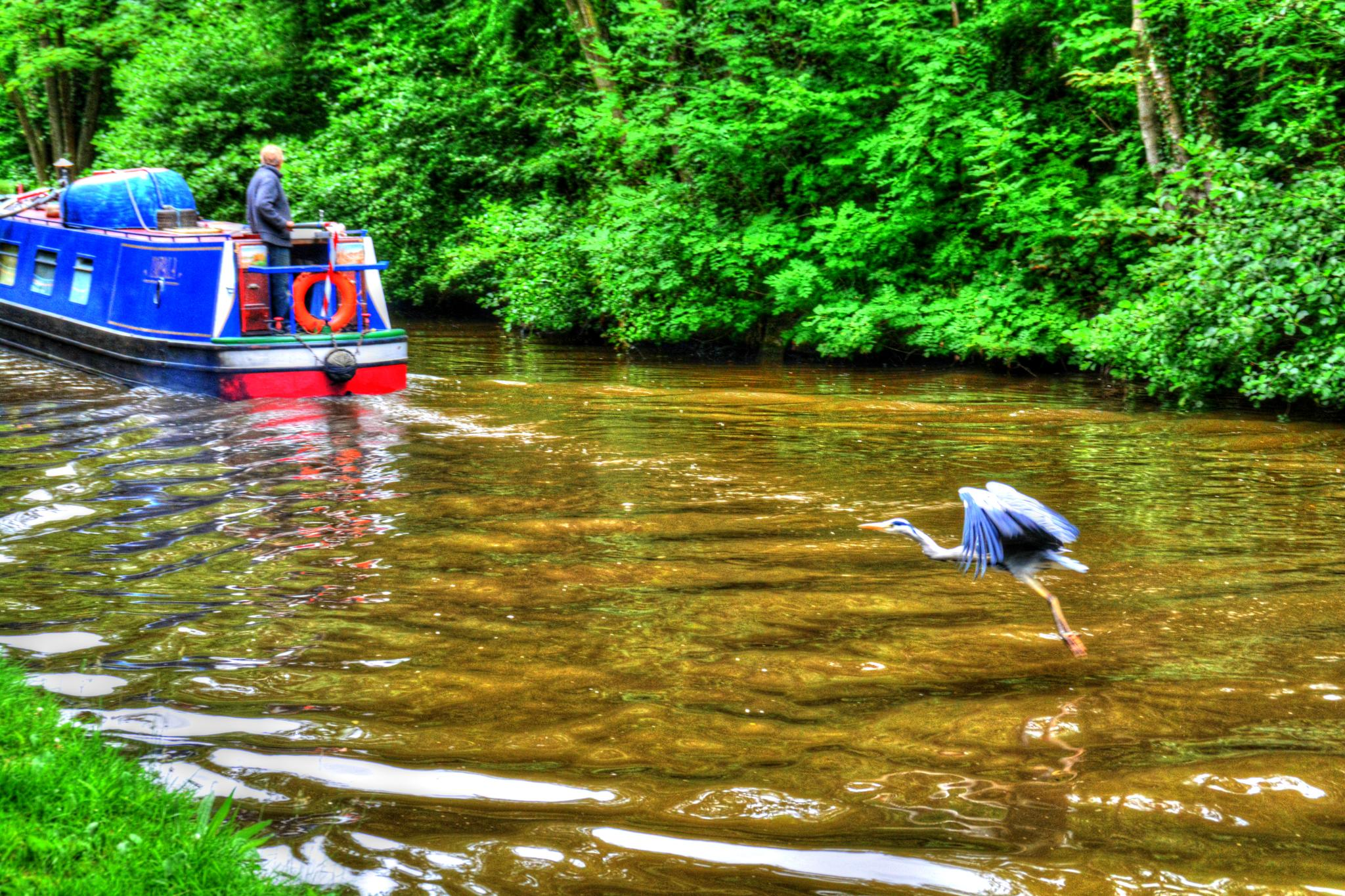 Wait for me!! whaley bridge canal by Stuart Robertshaw Photography