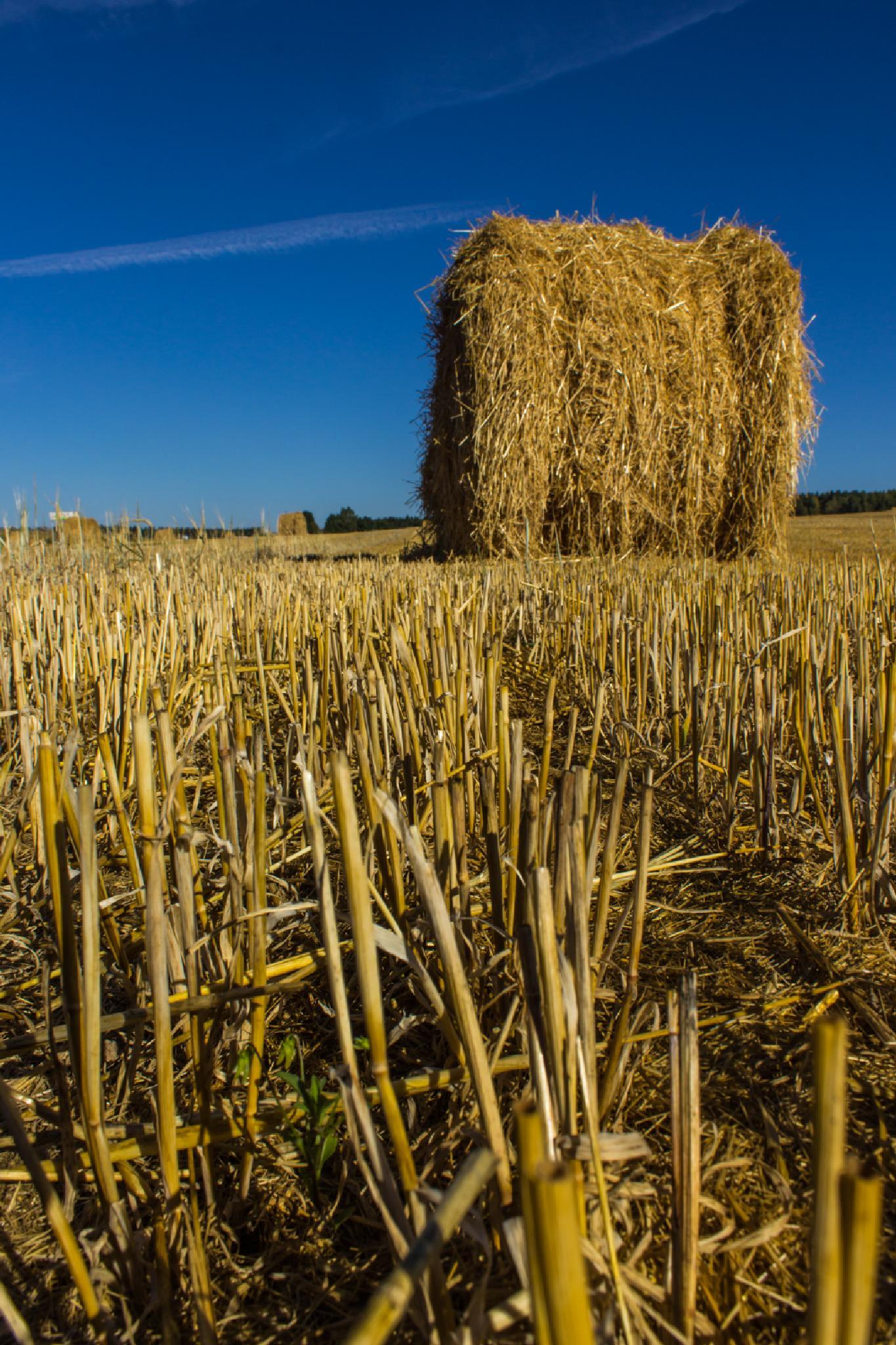 Harvest time by kozakovs