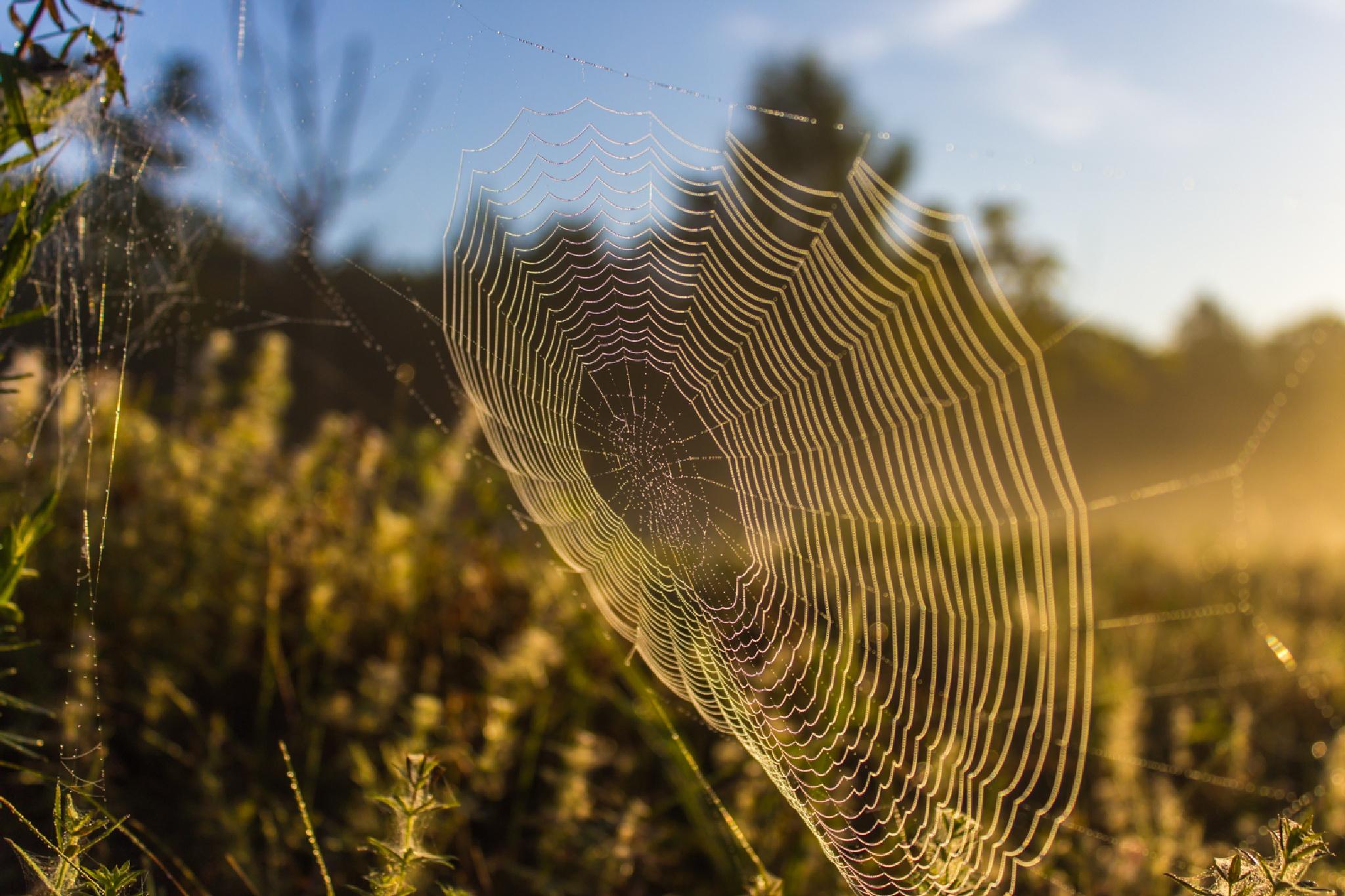 spiderweb in the sun by kozakovs
