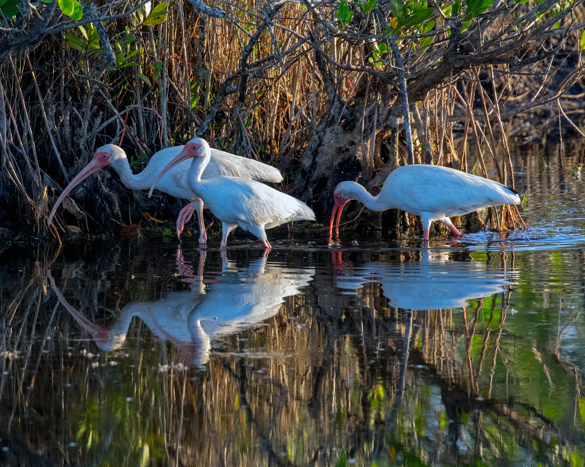 Morning Reflections by Barry Melamed