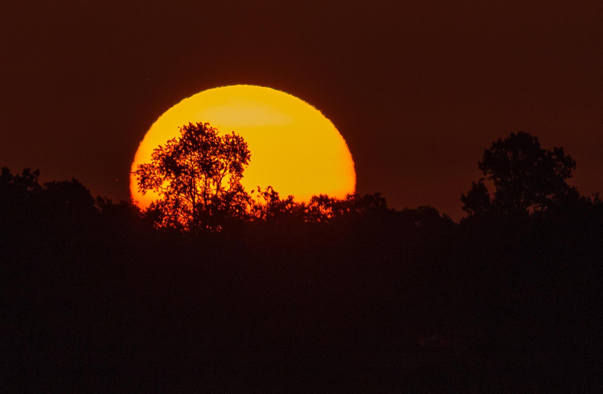 6/24/16 Sunrise Lake Apopka by Barry Melamed