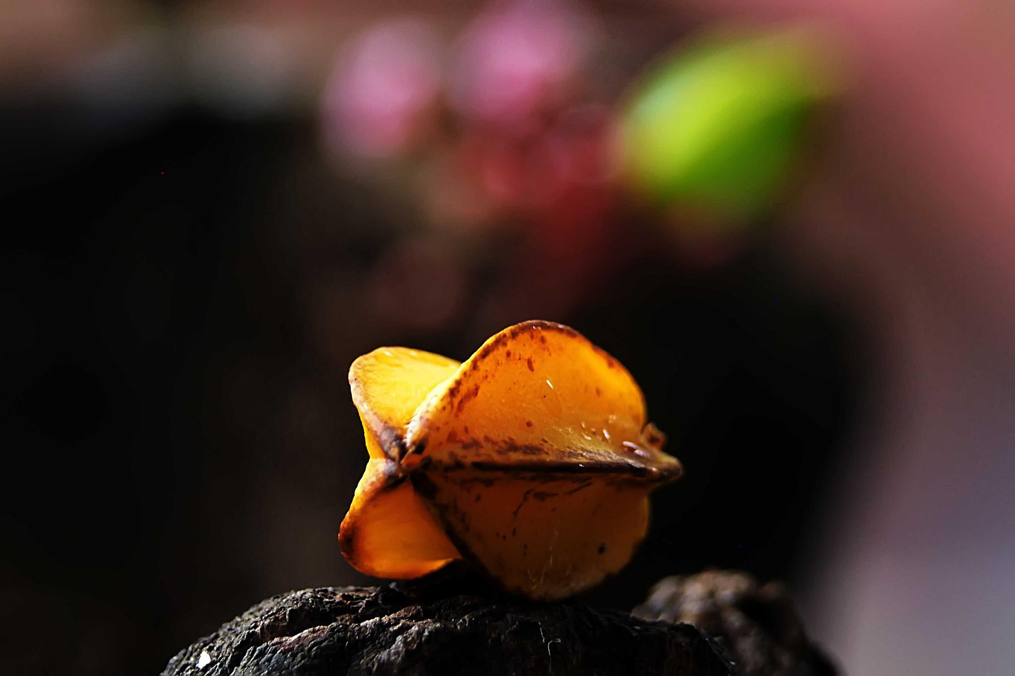 Untitled by Tran Ngoc Nghi