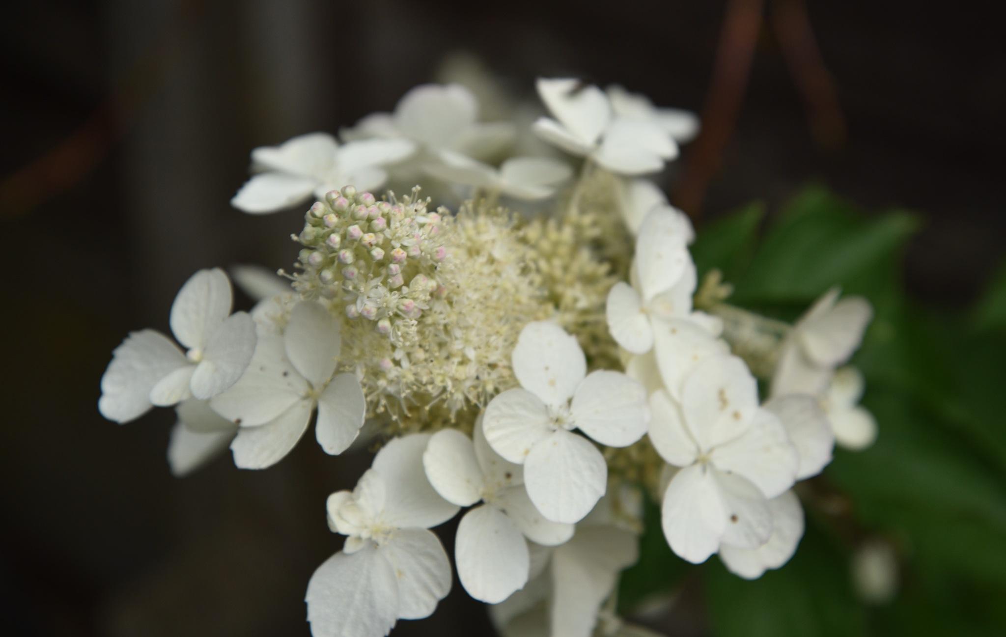 White  Flower  .. by juliehatt123