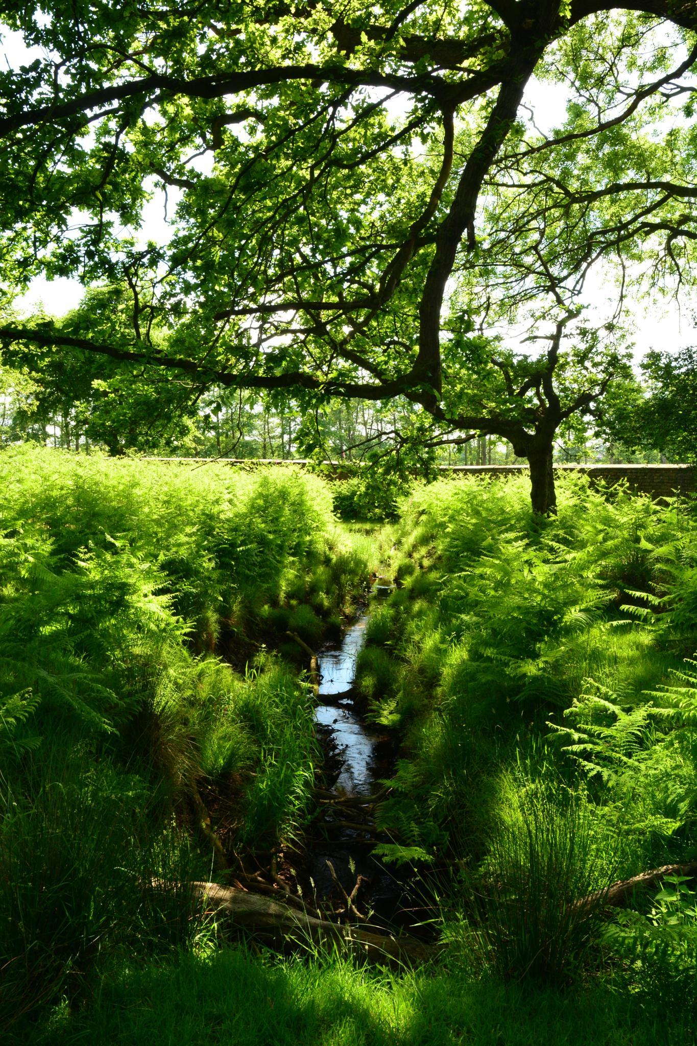 Woodland stream! by juliehatt123
