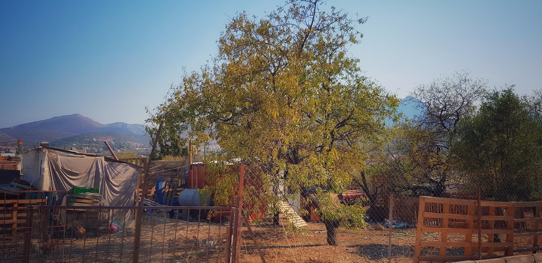 All you need is a tree by Meriç Aksu