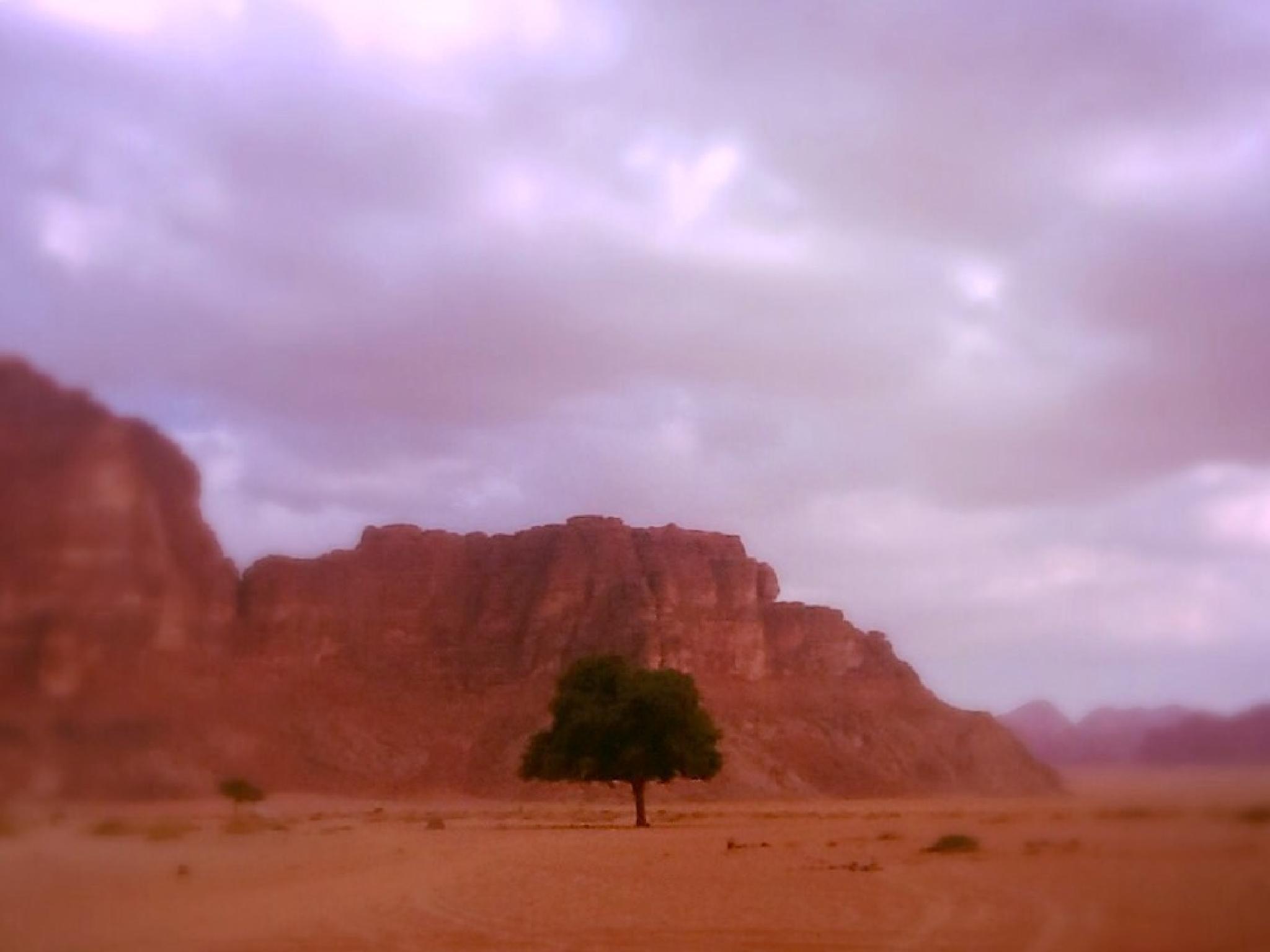 Tree of life in Wadi Rum by Meriç Aksu