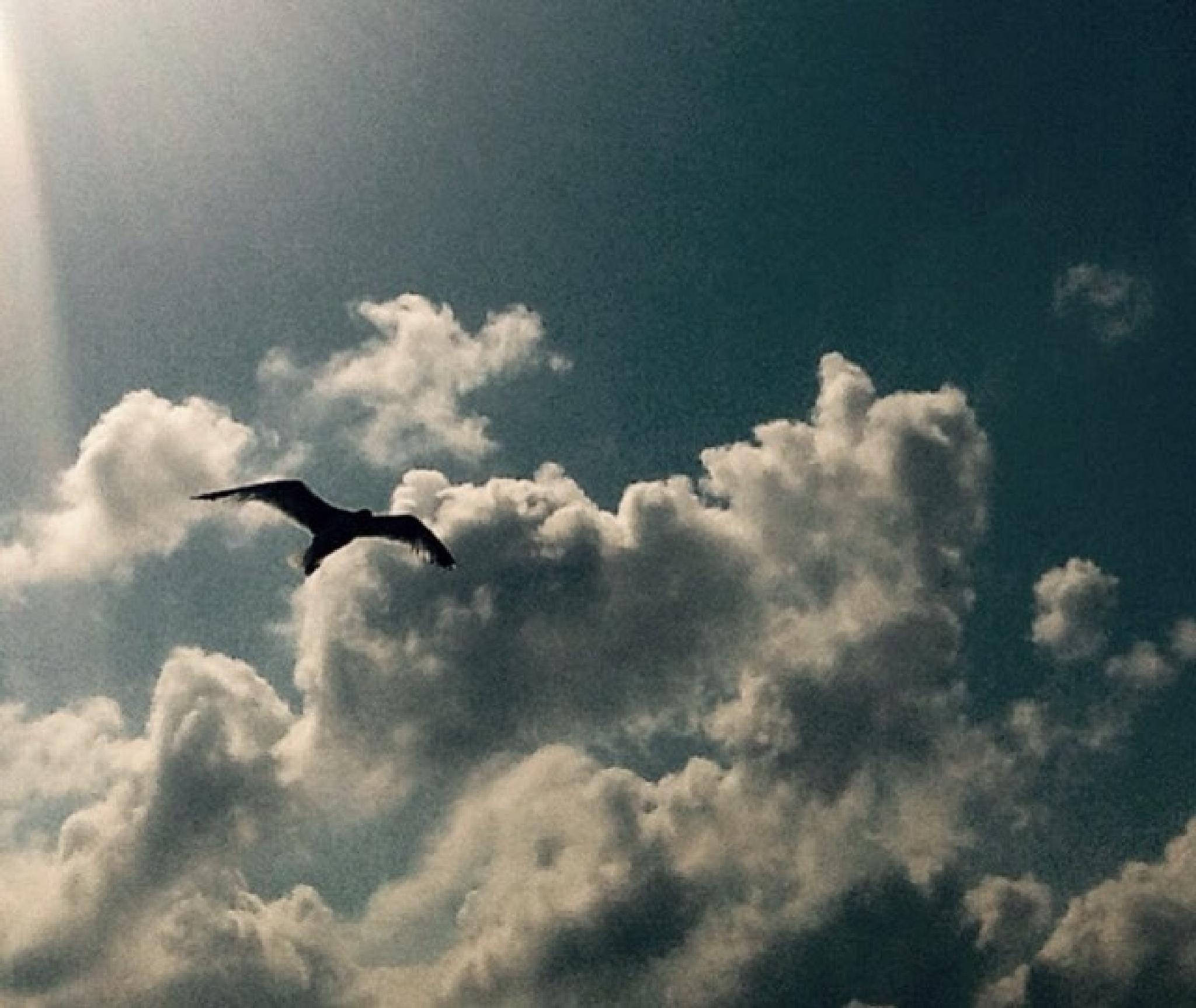 Free as a bird by Meriç Aksu