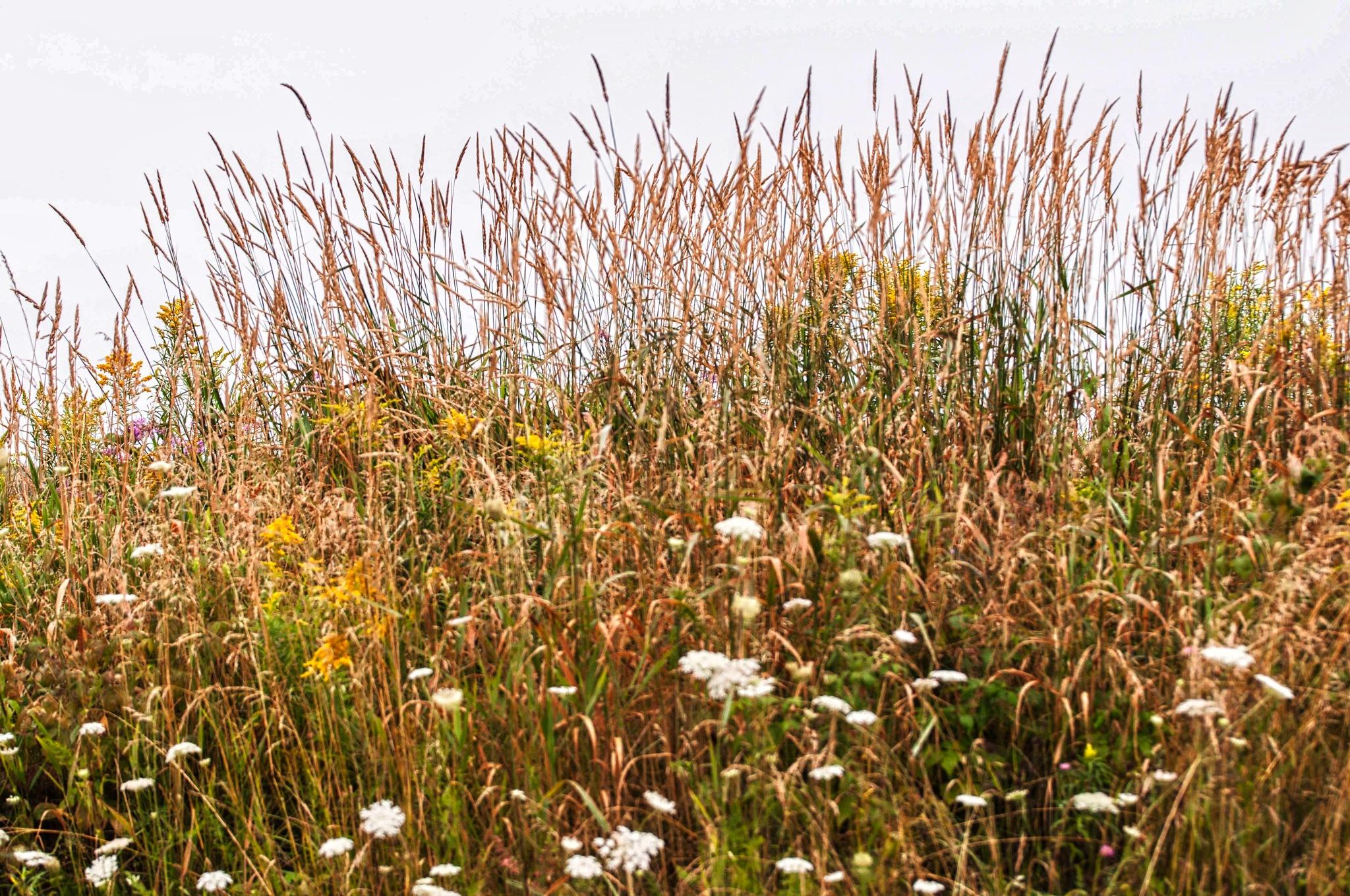 Tall Grass by Wayne L. Talbot