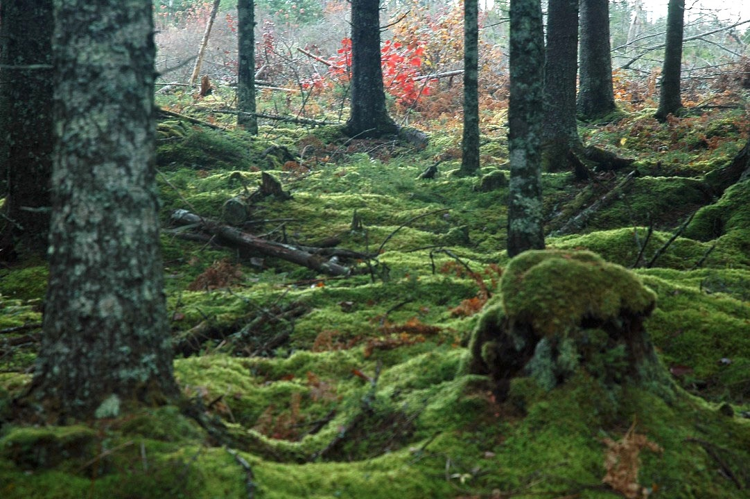 The Forest Floor by Wayne L. Talbot