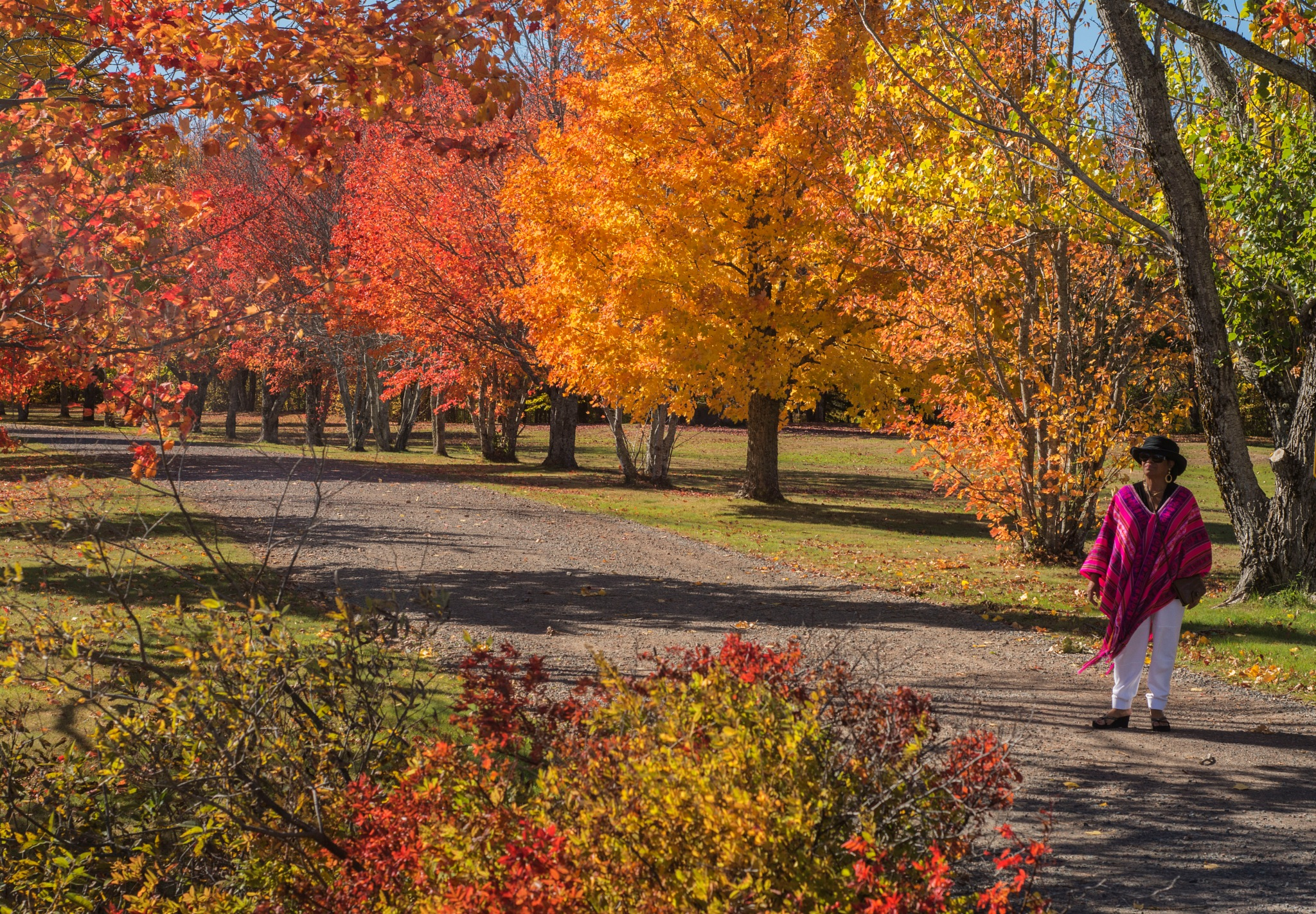 A Walk in the Park by Wayne L. Talbot