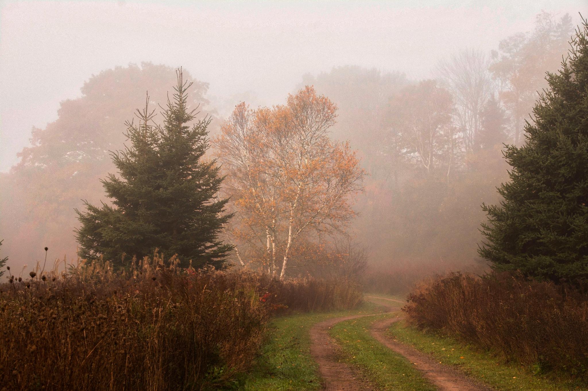 Masked in Fog by Wayne L. Talbot
