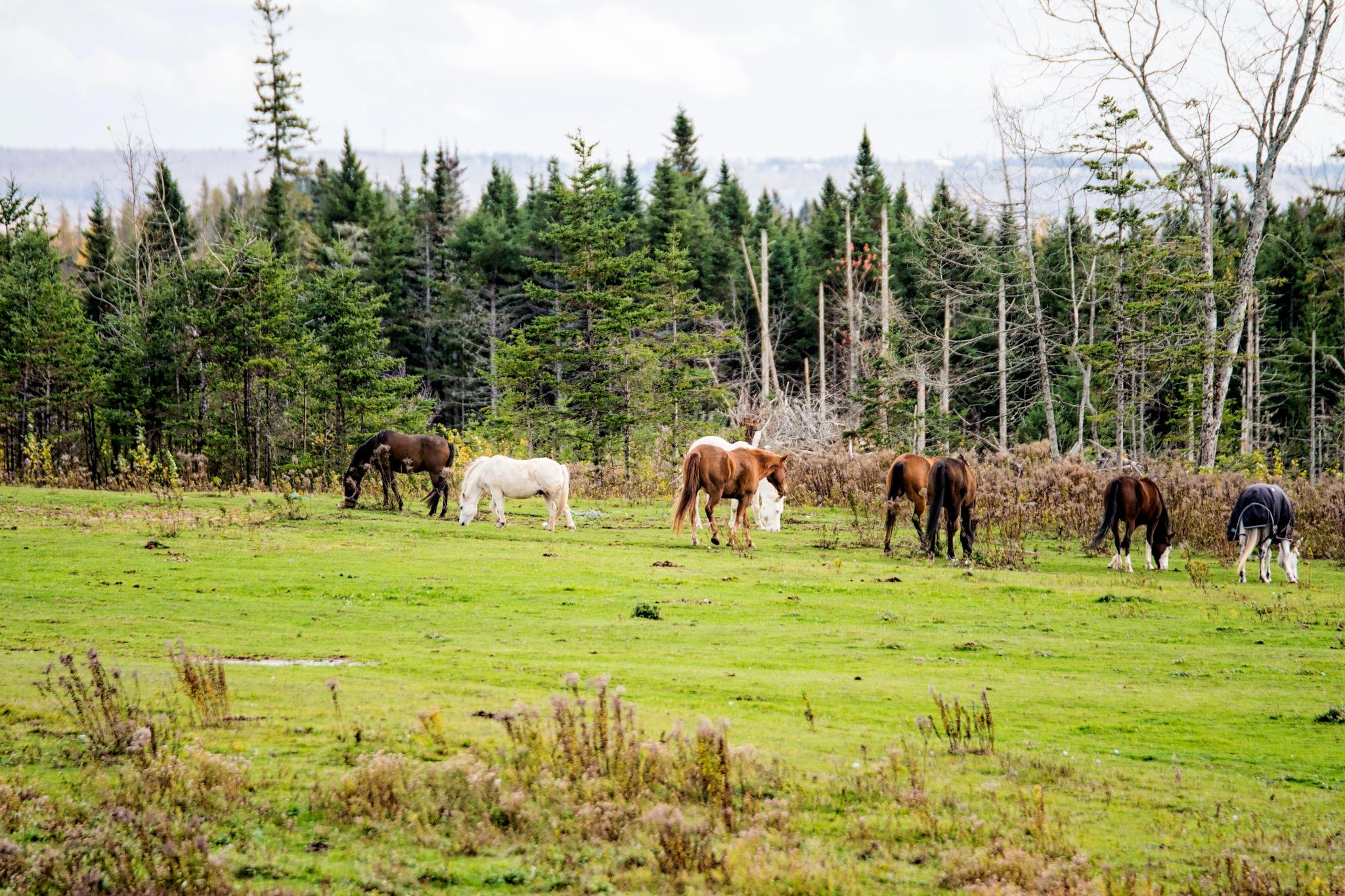 The Herd by Wayne L. Talbot