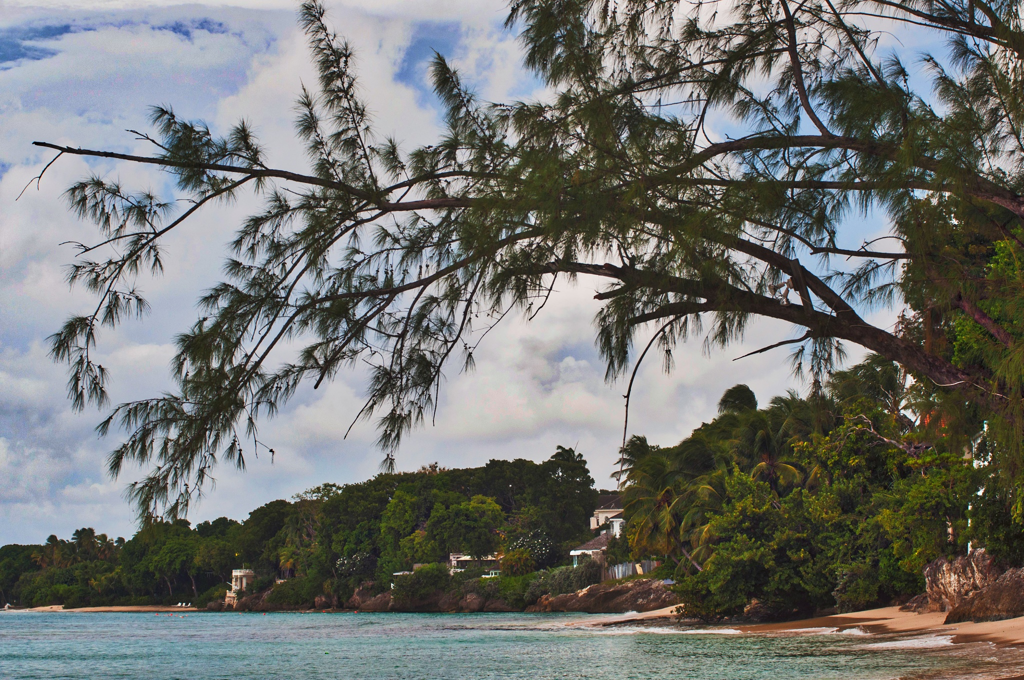 Tree Over-Arching the Beach, St Peters, Barbados by Wayne L. Talbot