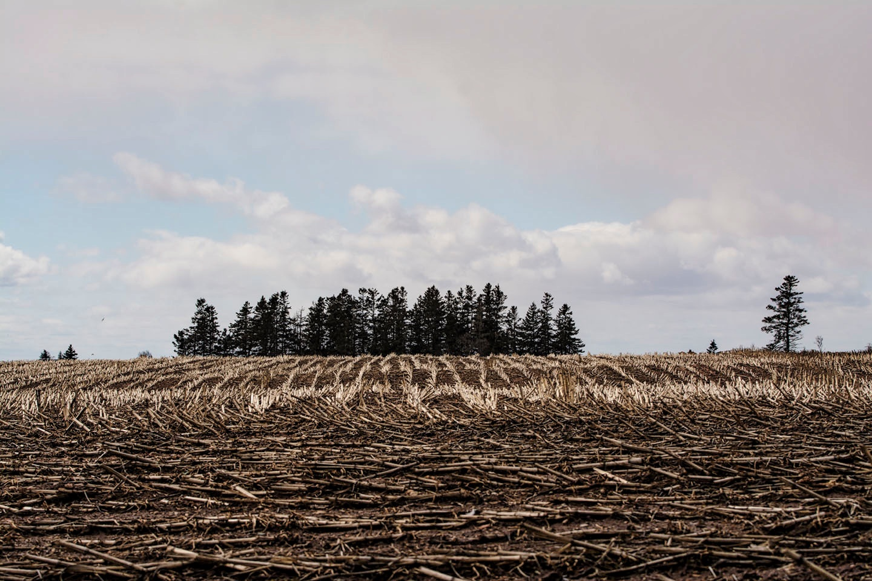 Last Year's Corn Harvest Leftovers by Wayne L. Talbot