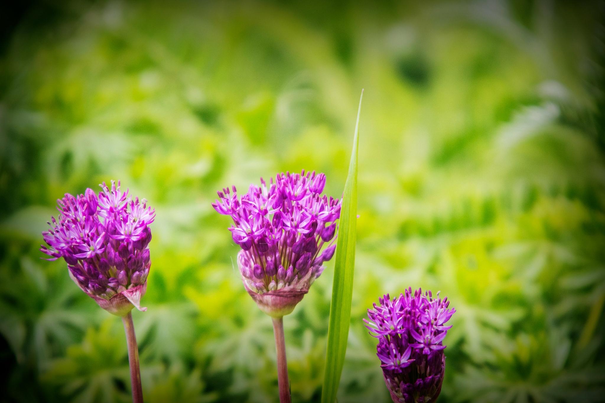 Purple Weeds II by Wayne L. Talbot