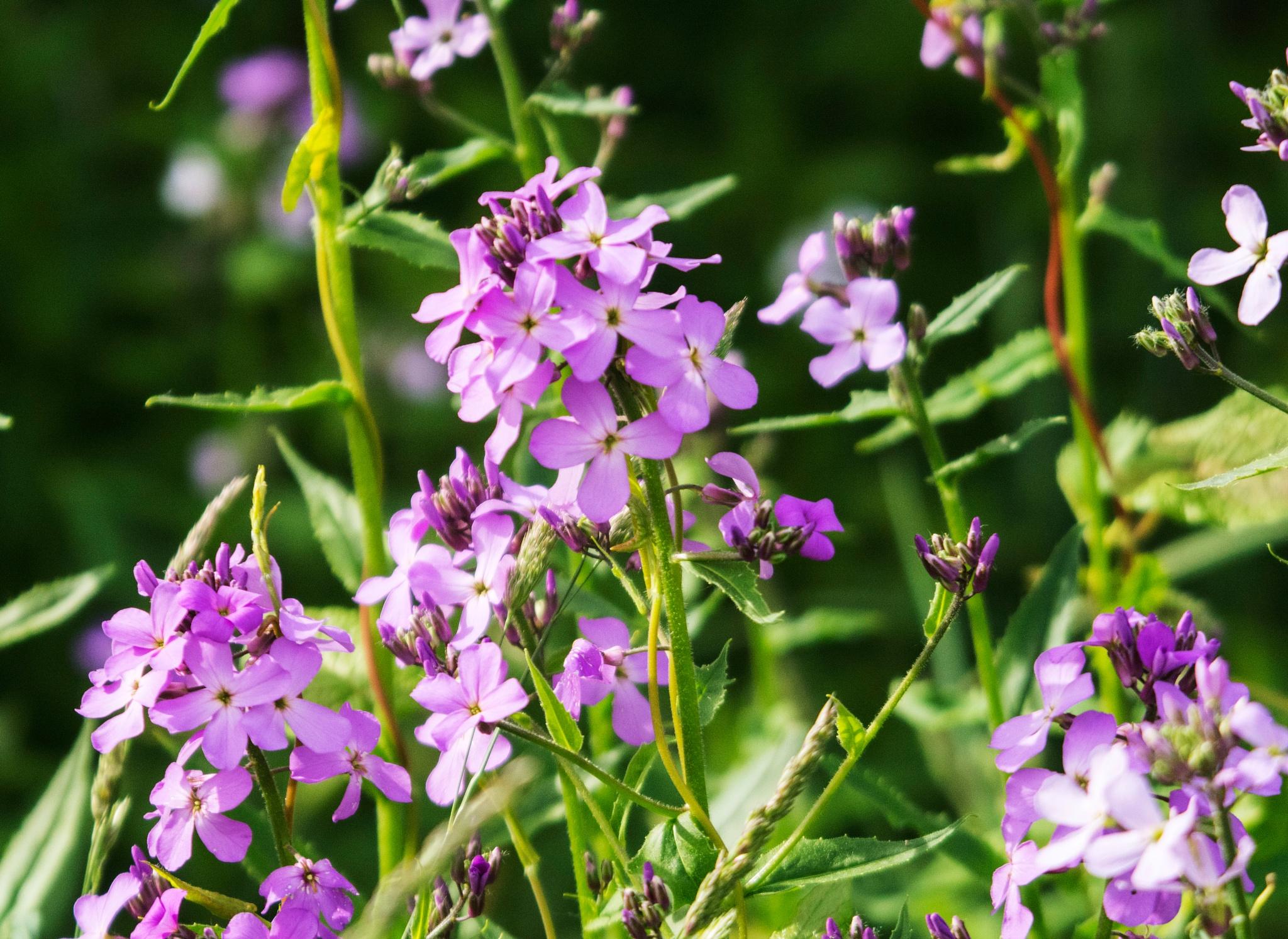 Wild Flowers II by Wayne L. Talbot
