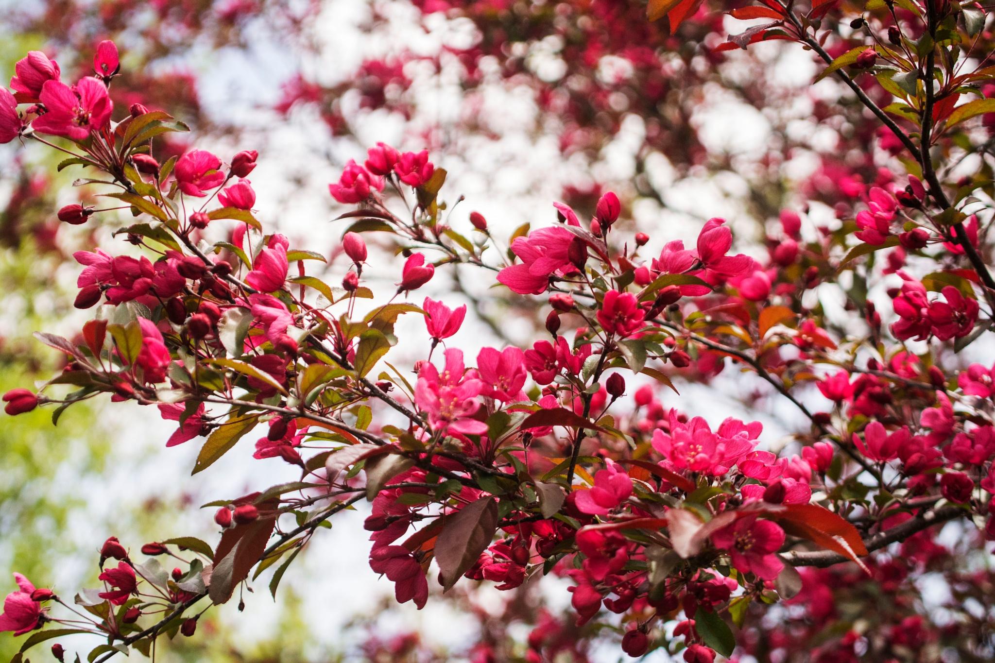 Beauty of Spring II by Wayne L. Talbot