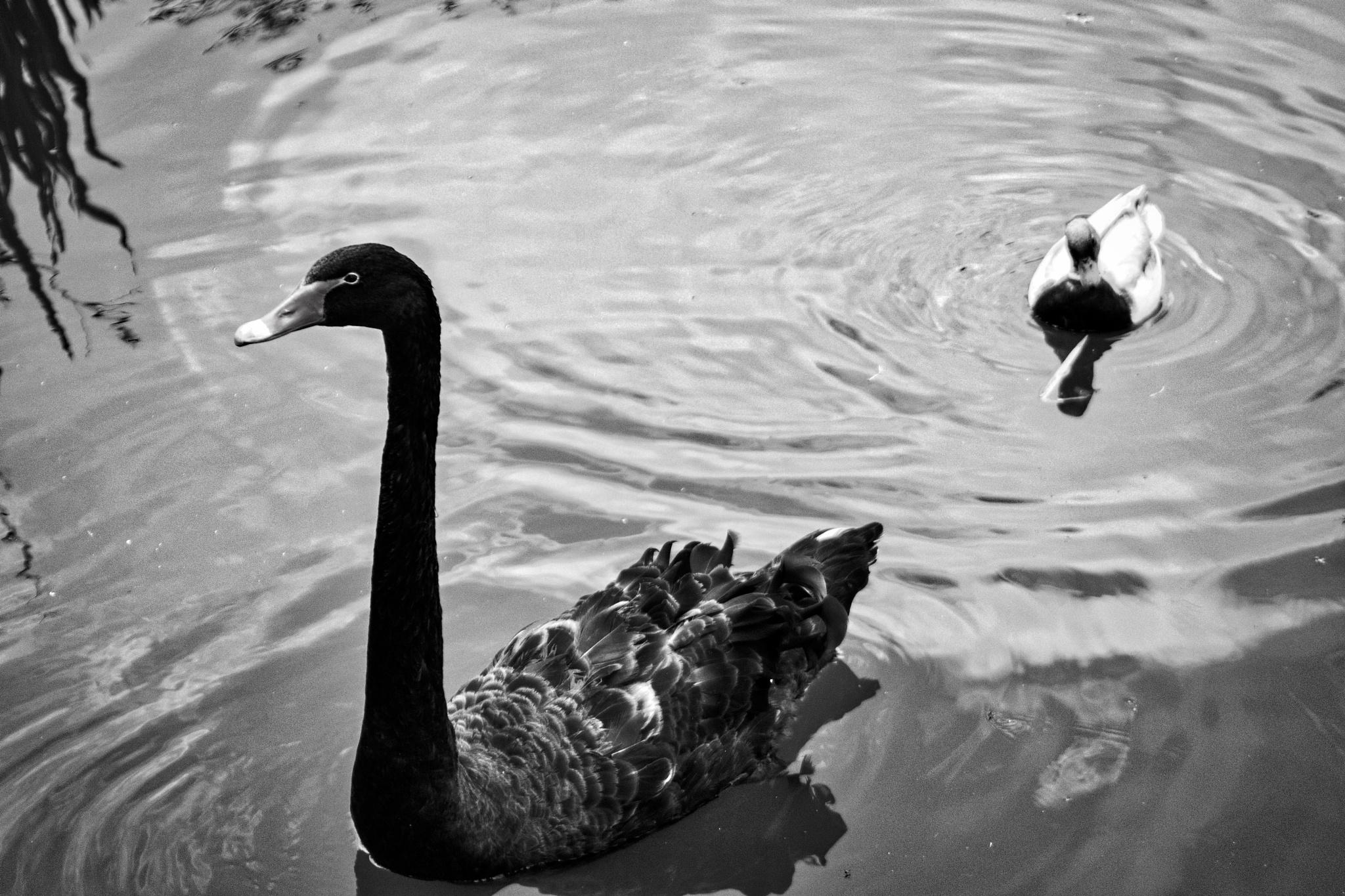 Follow the Leader  by Wayne L. Talbot