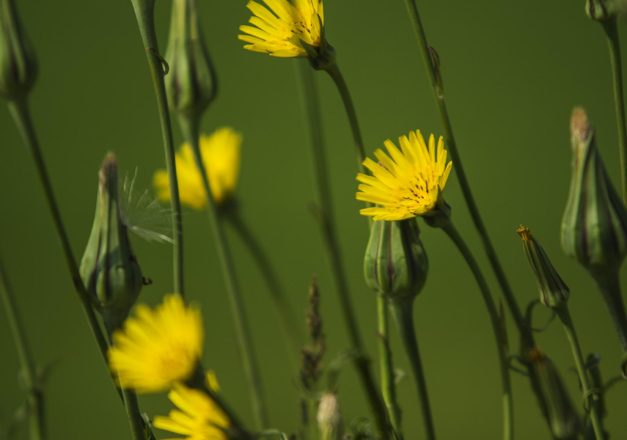 The Beauty of Weeds by Wayne L. Talbot