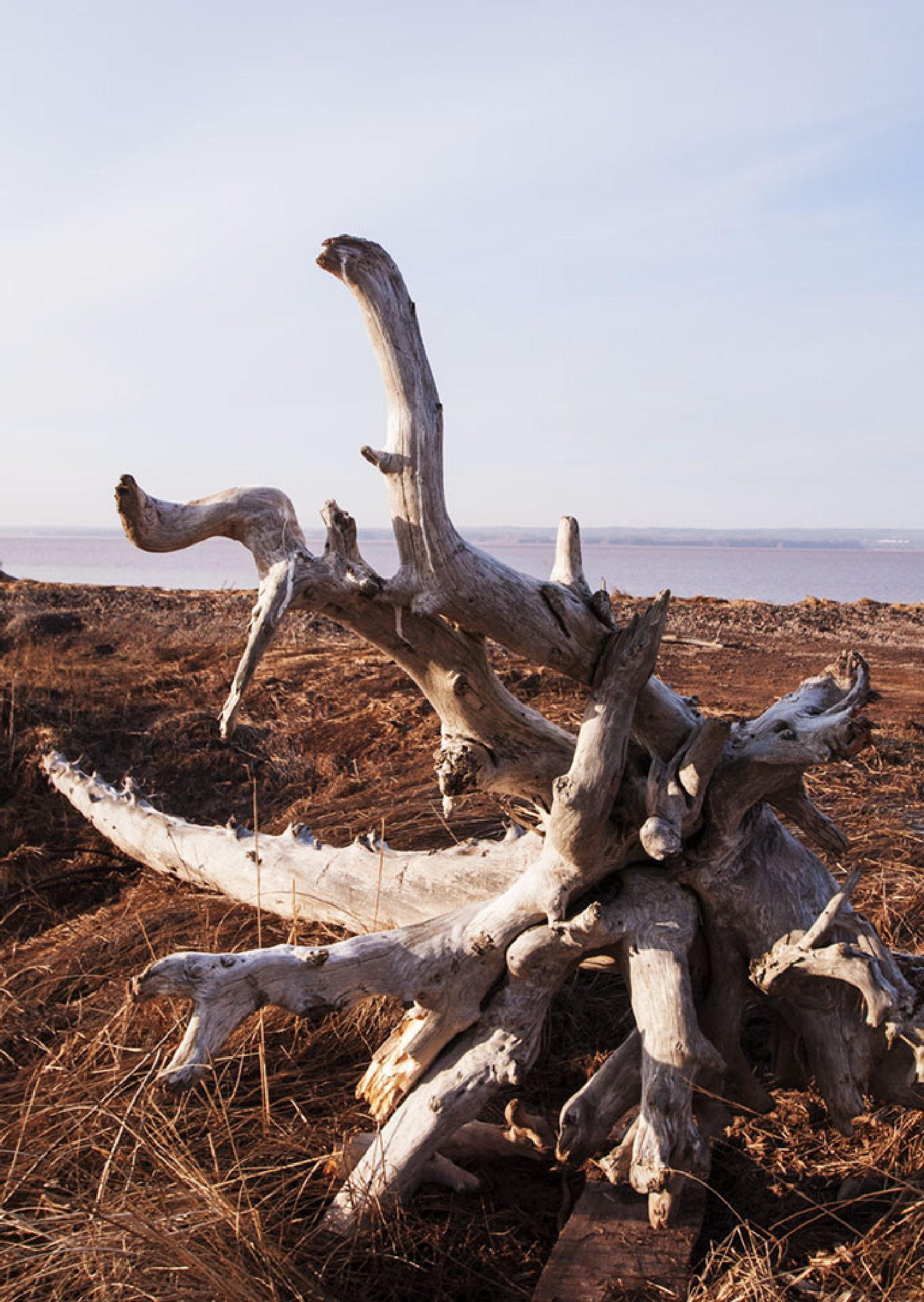 Driftwood 2 by Wayne L. Talbot
