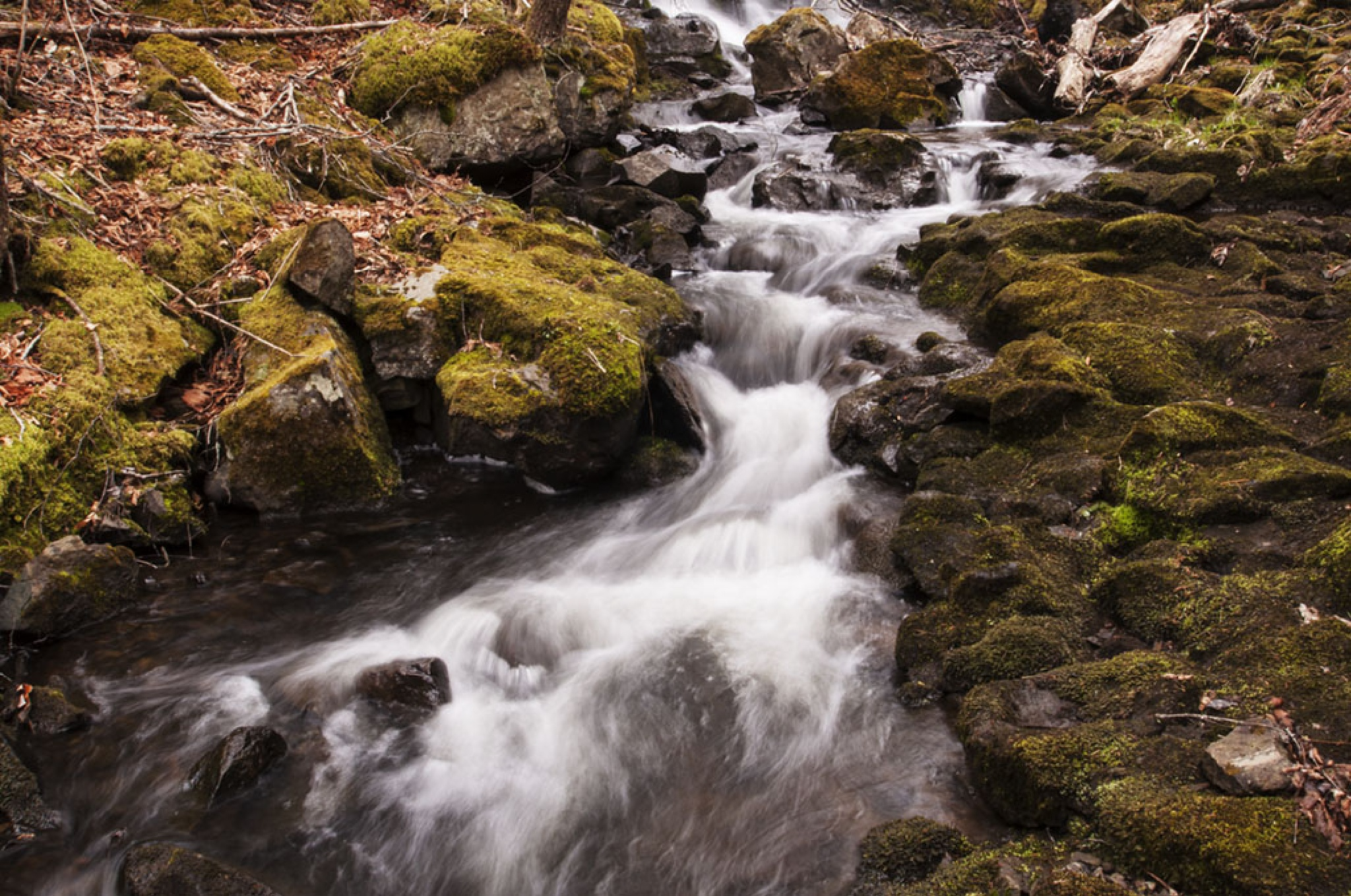 Flowing Through the Moss by Wayne L. Talbot