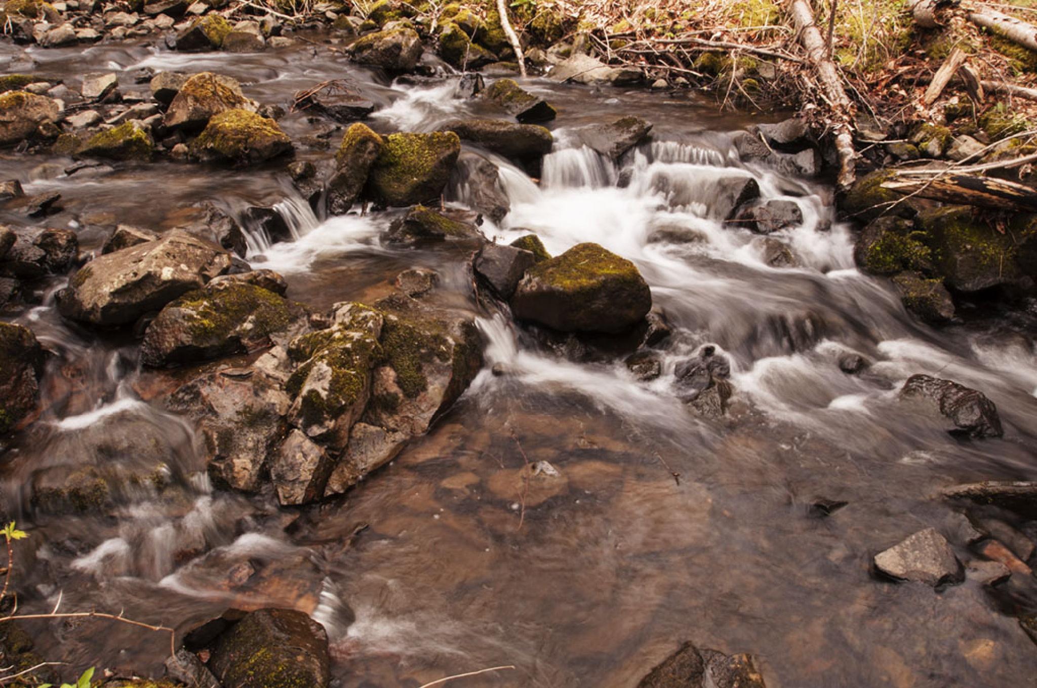 Quite Little Stream by Wayne L. Talbot