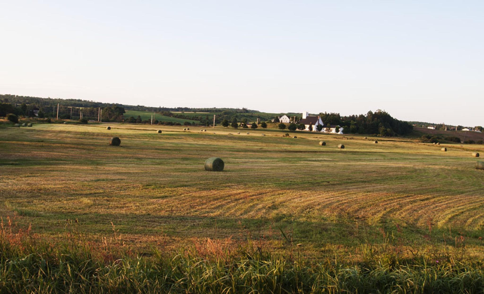 Hay Field by Wayne L. Talbot