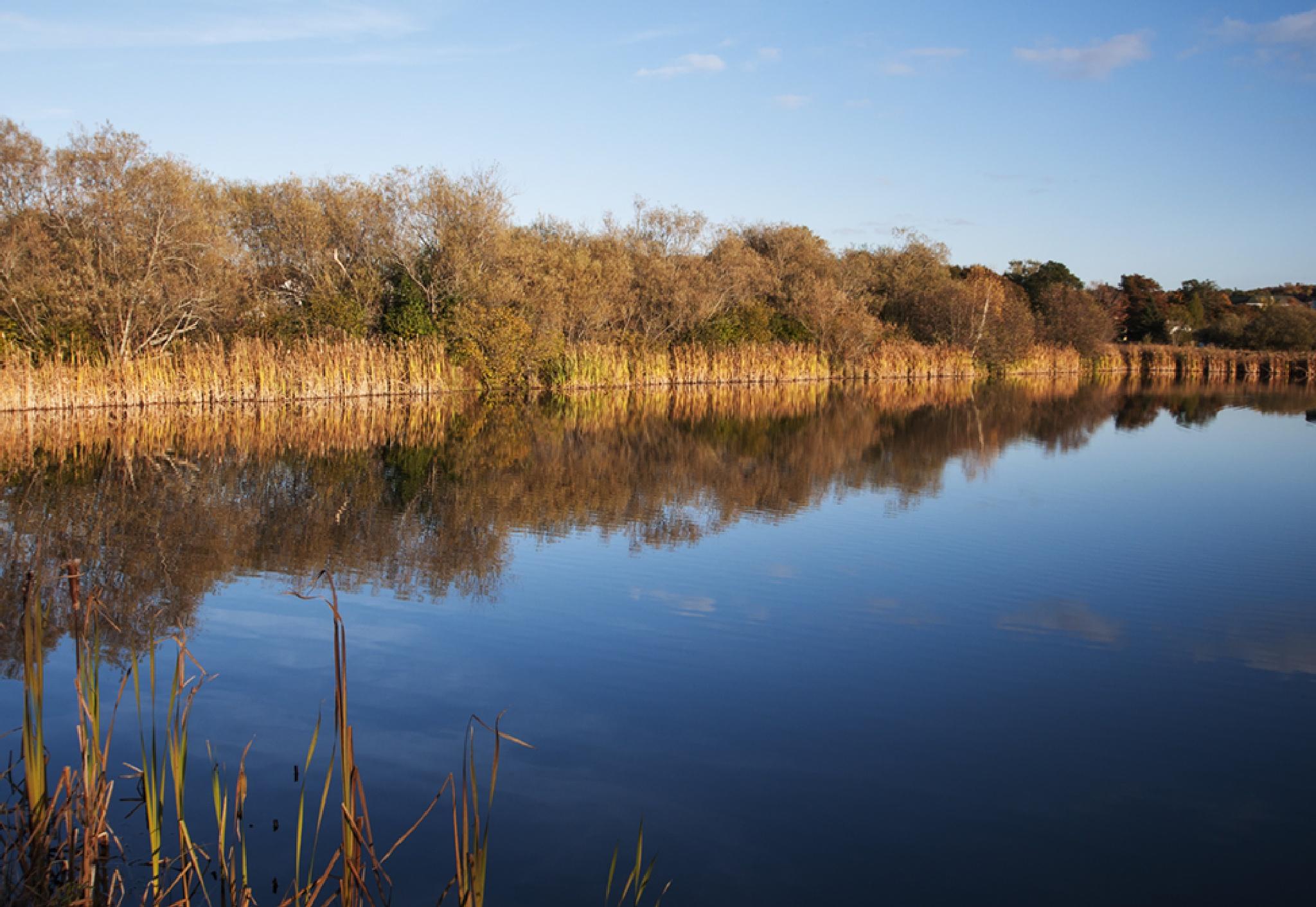 Sunlight on the Pond 2 by Wayne L. Talbot