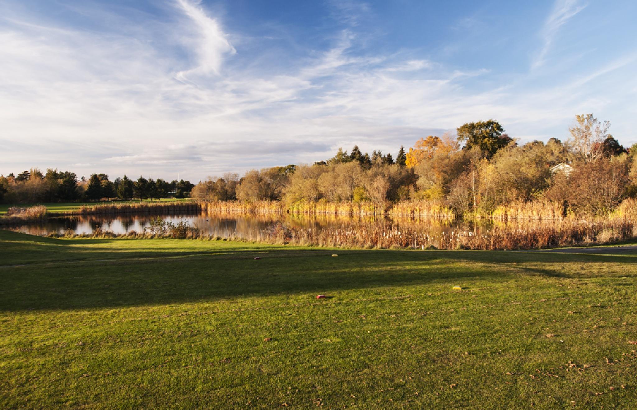Sunlight on the Pond 3 by Wayne L. Talbot