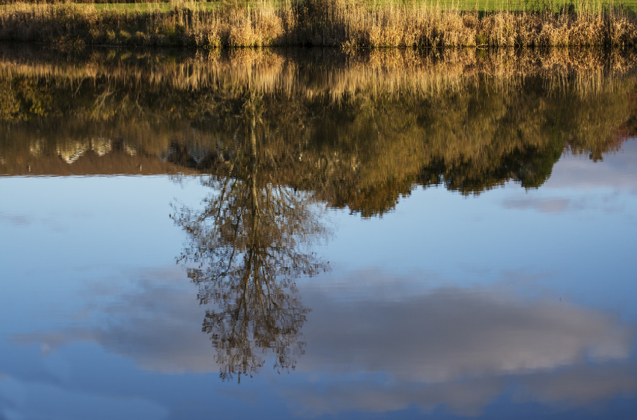 Reflections in the Pond by Wayne L. Talbot