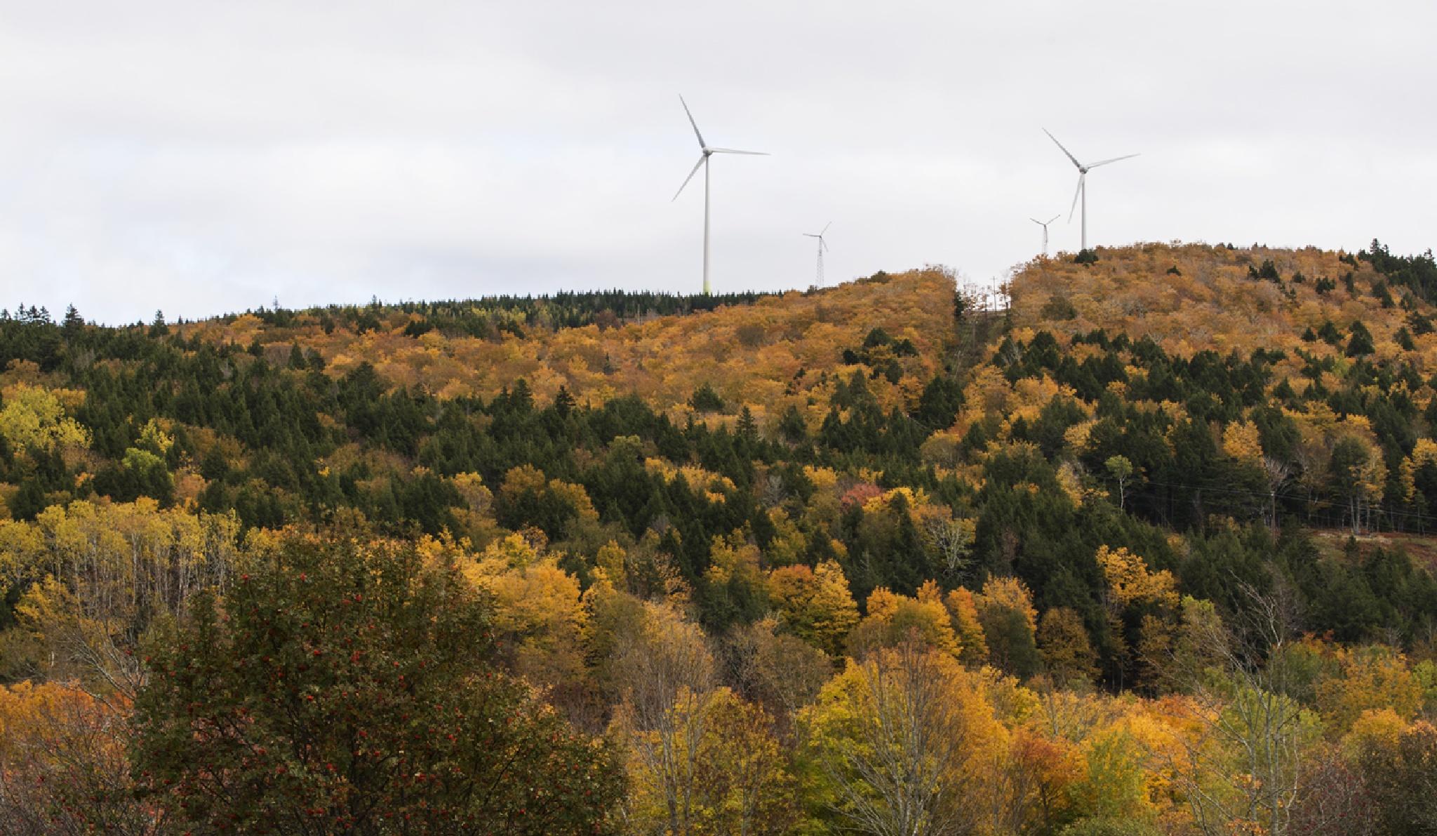 Wind Turbines on the Horizon  by Wayne L. Talbot