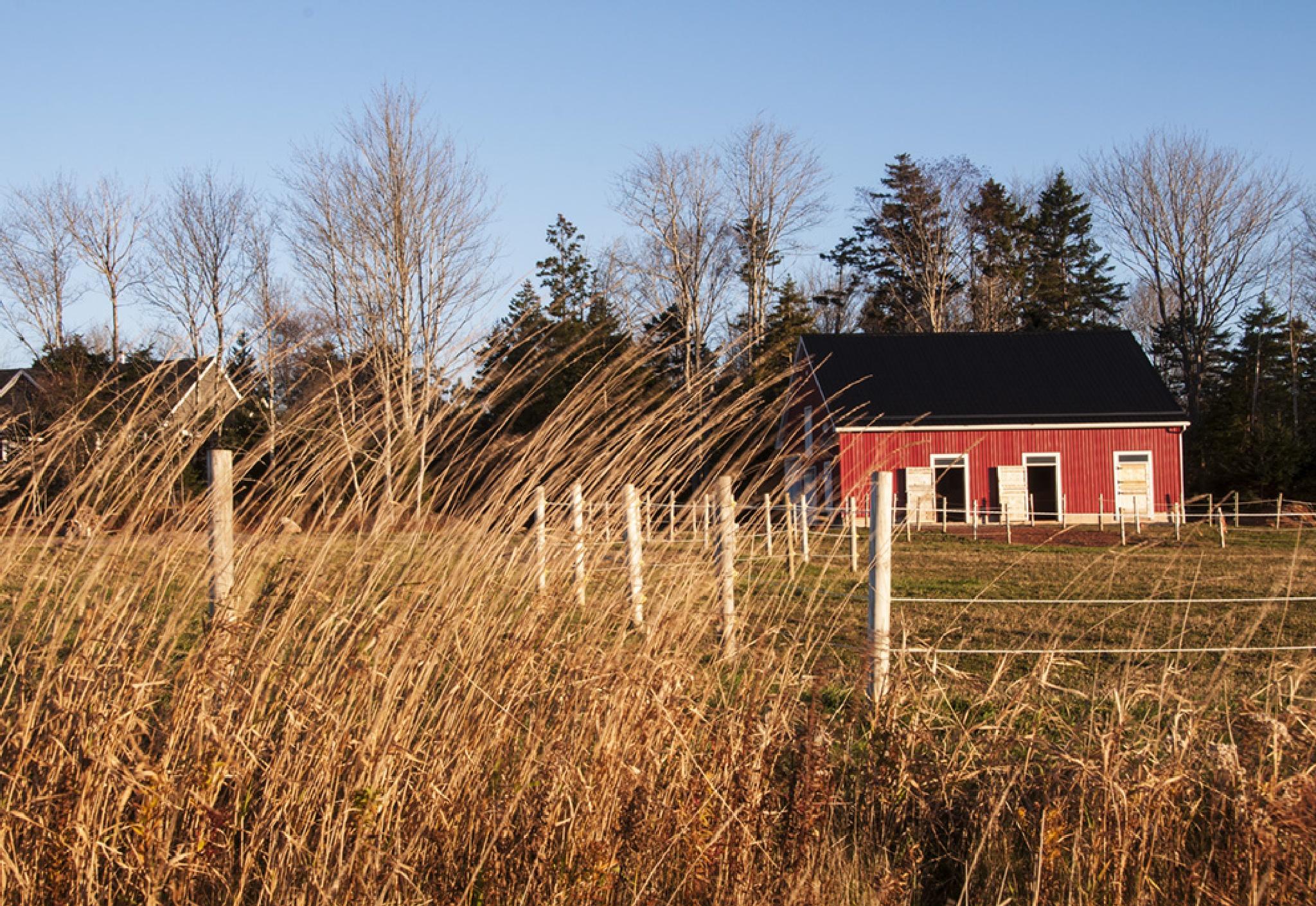 Horse Barn by Wayne L. Talbot