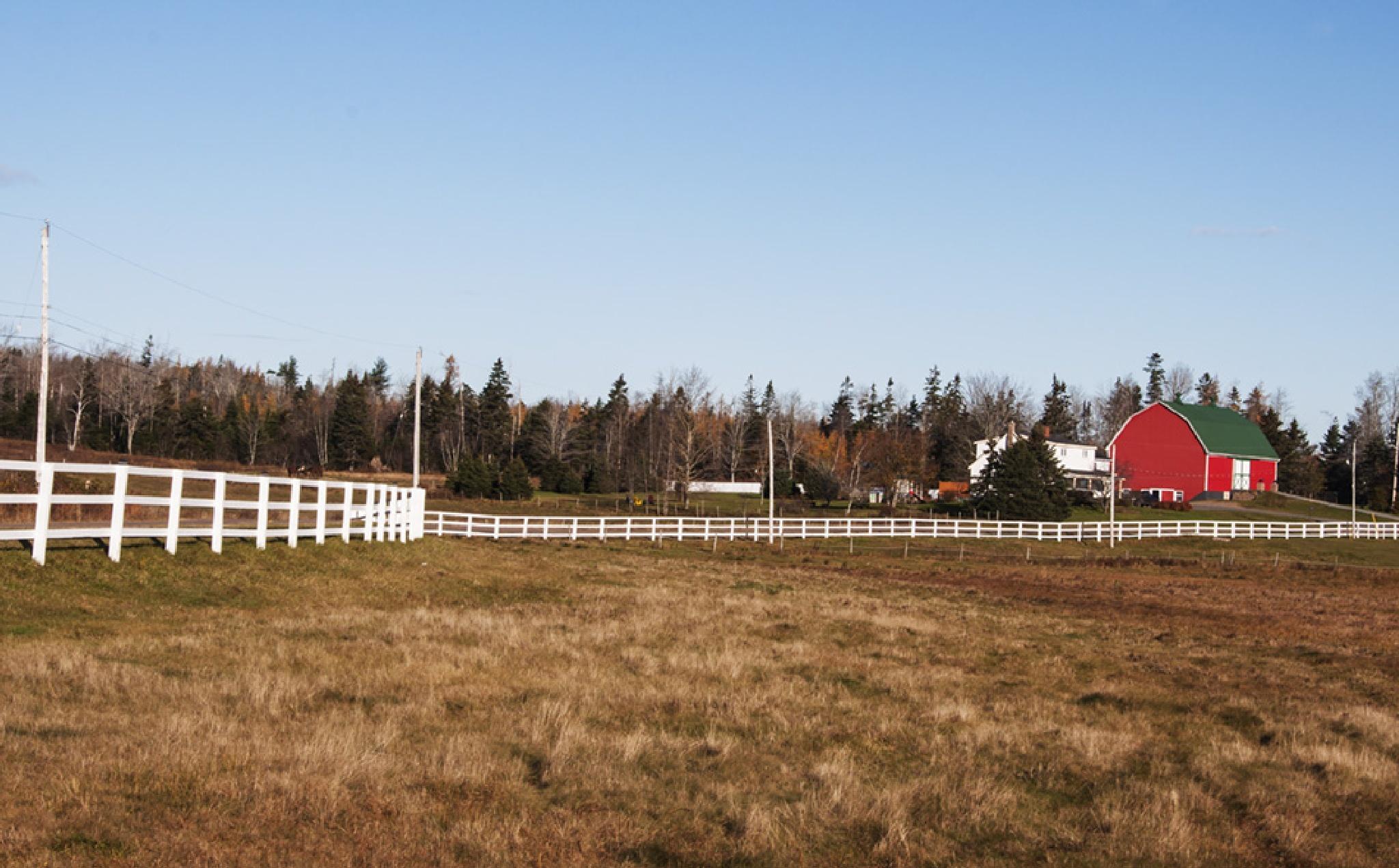 Fenced-In 2 by Wayne L. Talbot