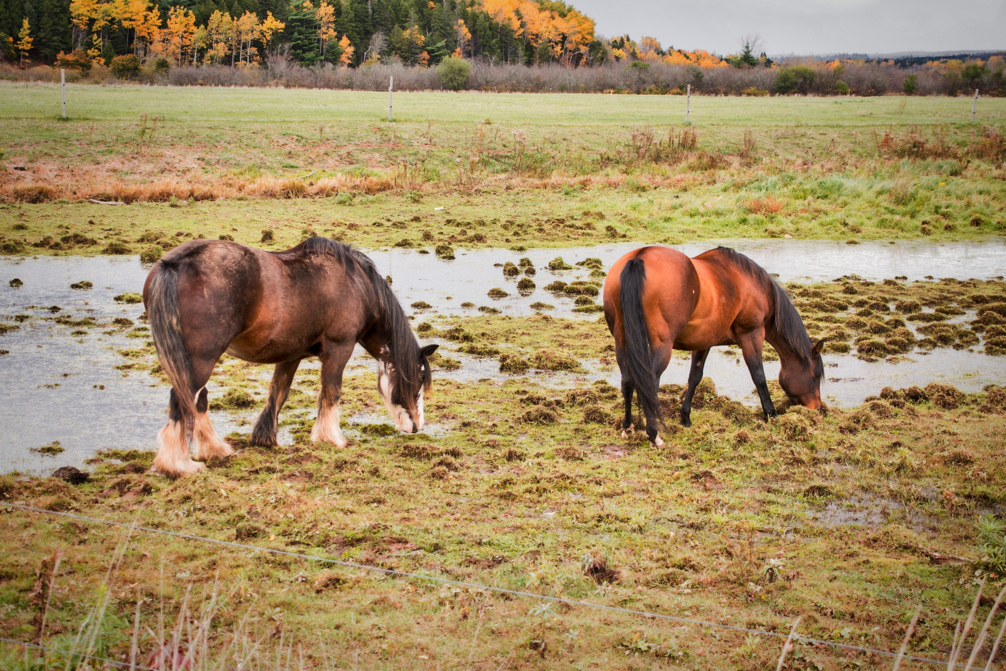 A Big Draft Horse & his Partner  by Wayne L. Talbot