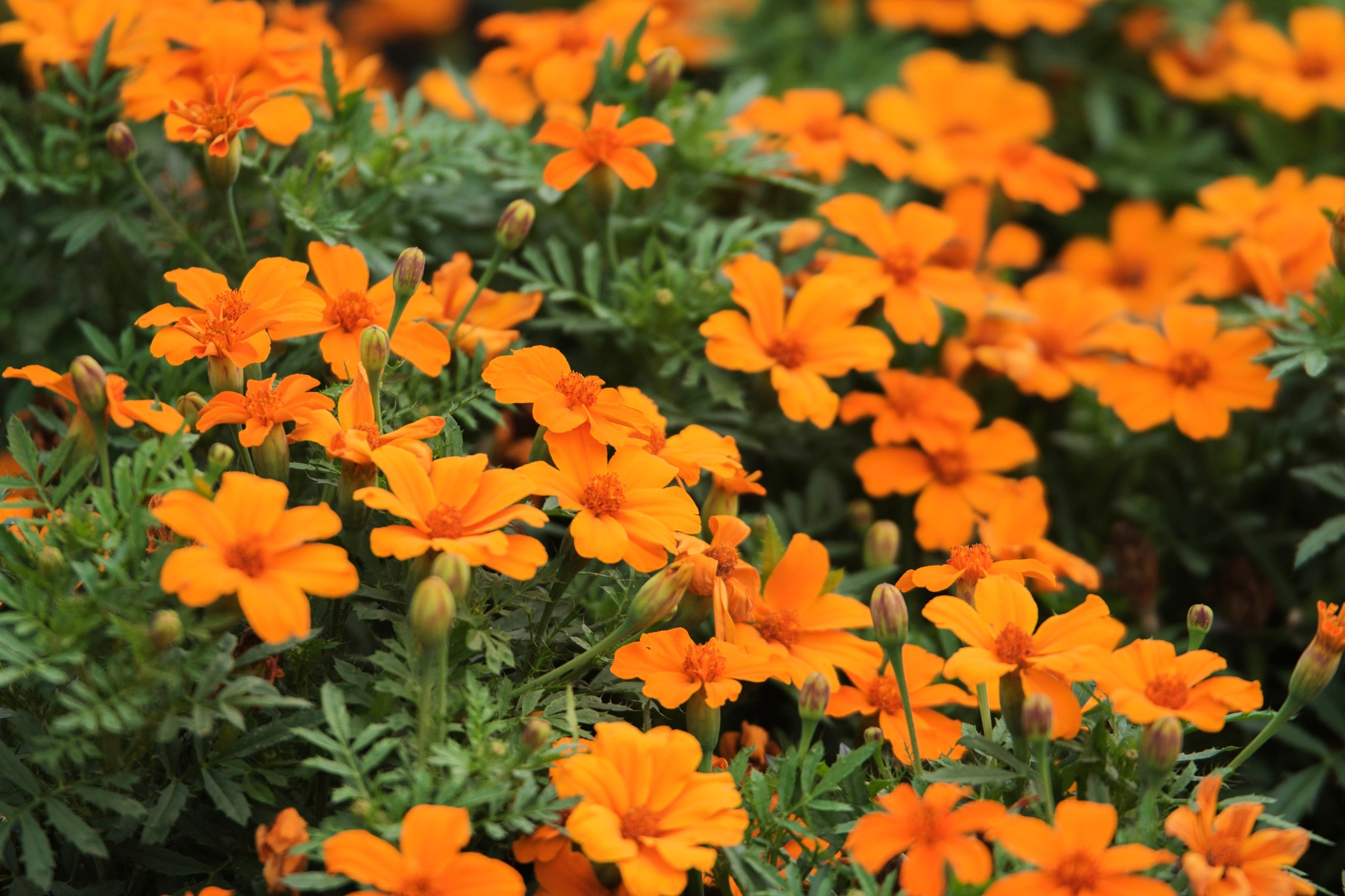 Bright Orange by Wayne L. Talbot