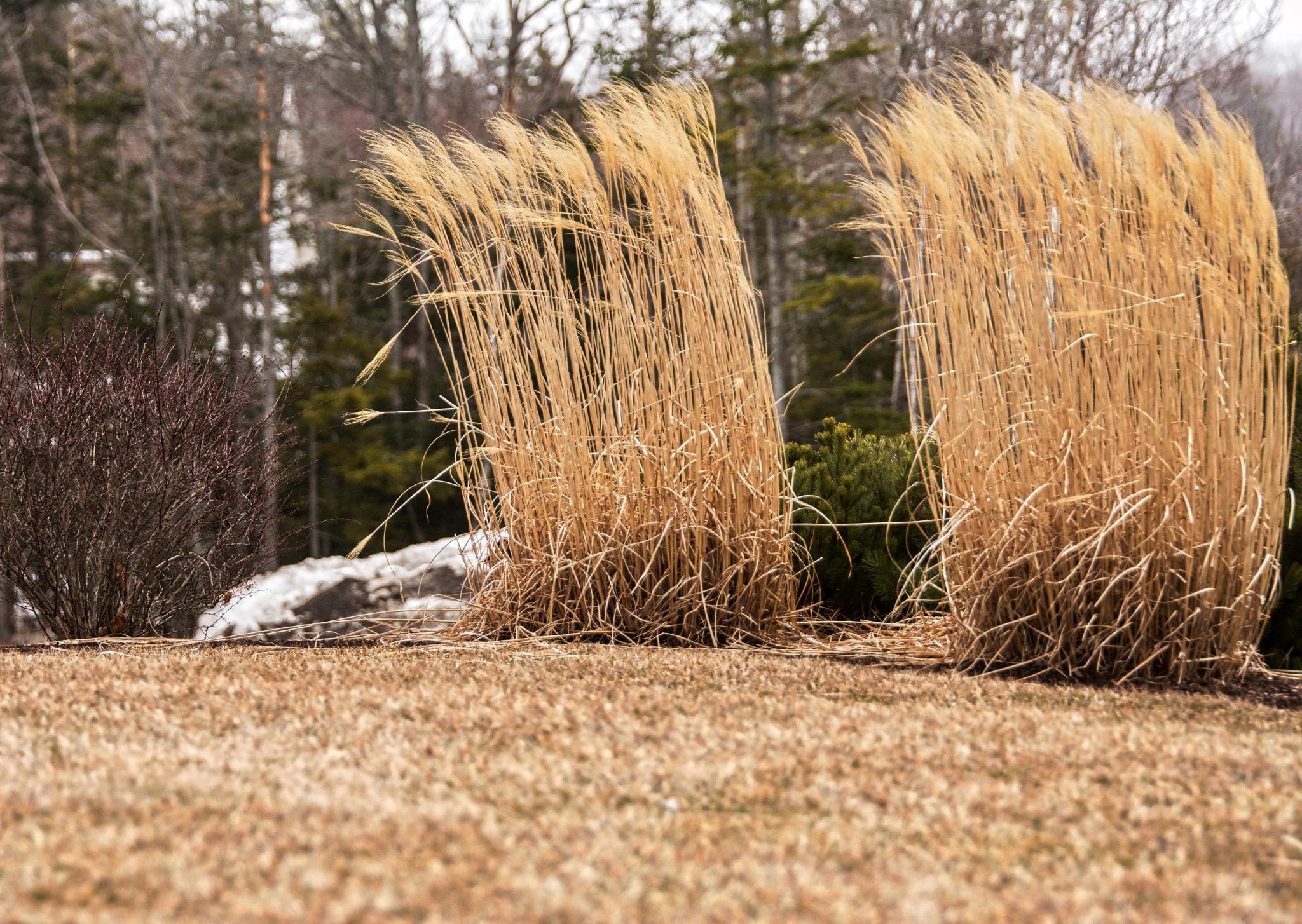 Tall Tall Grass by Wayne L. Talbot