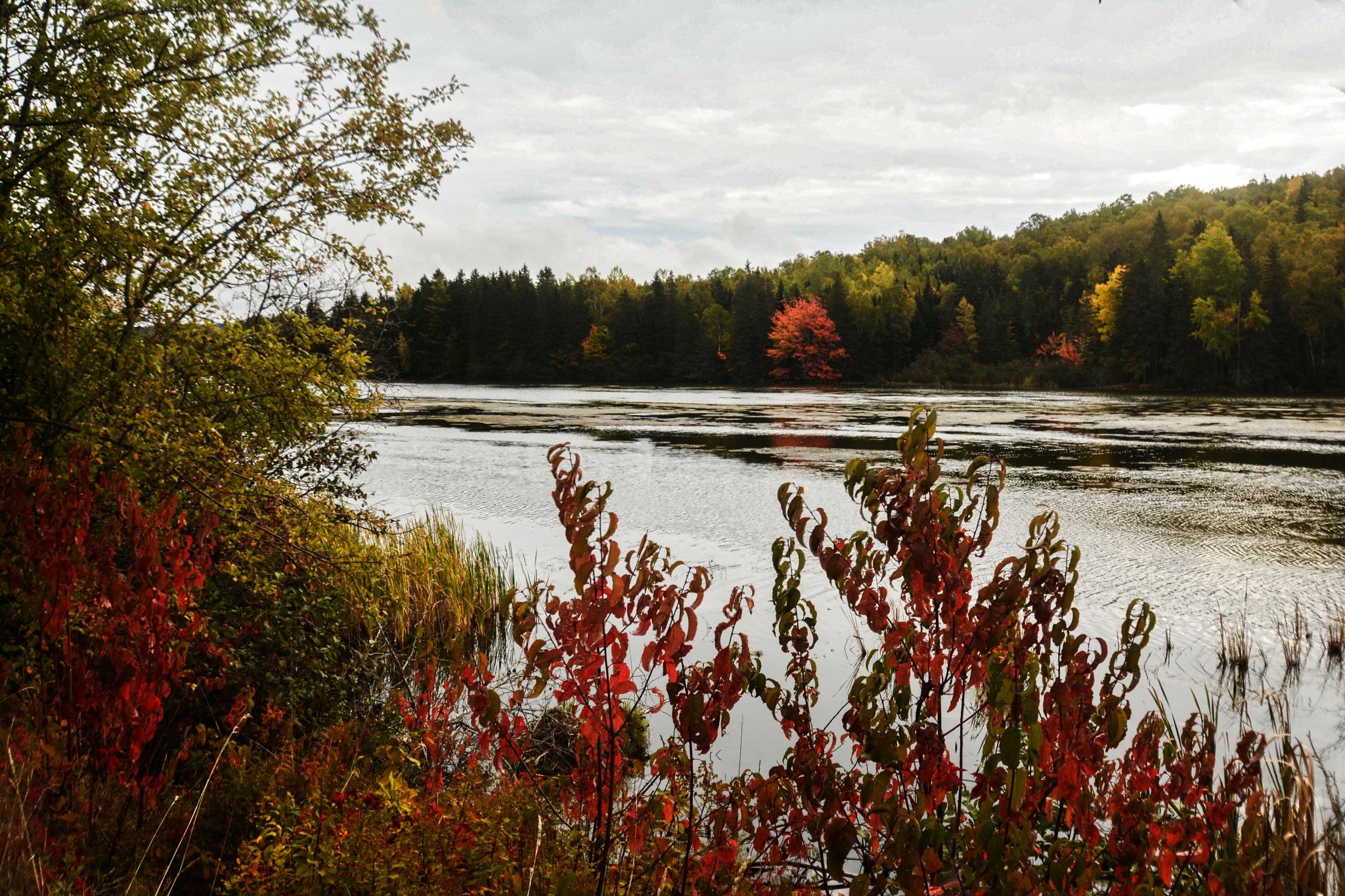 Lake by Wayne L. Talbot