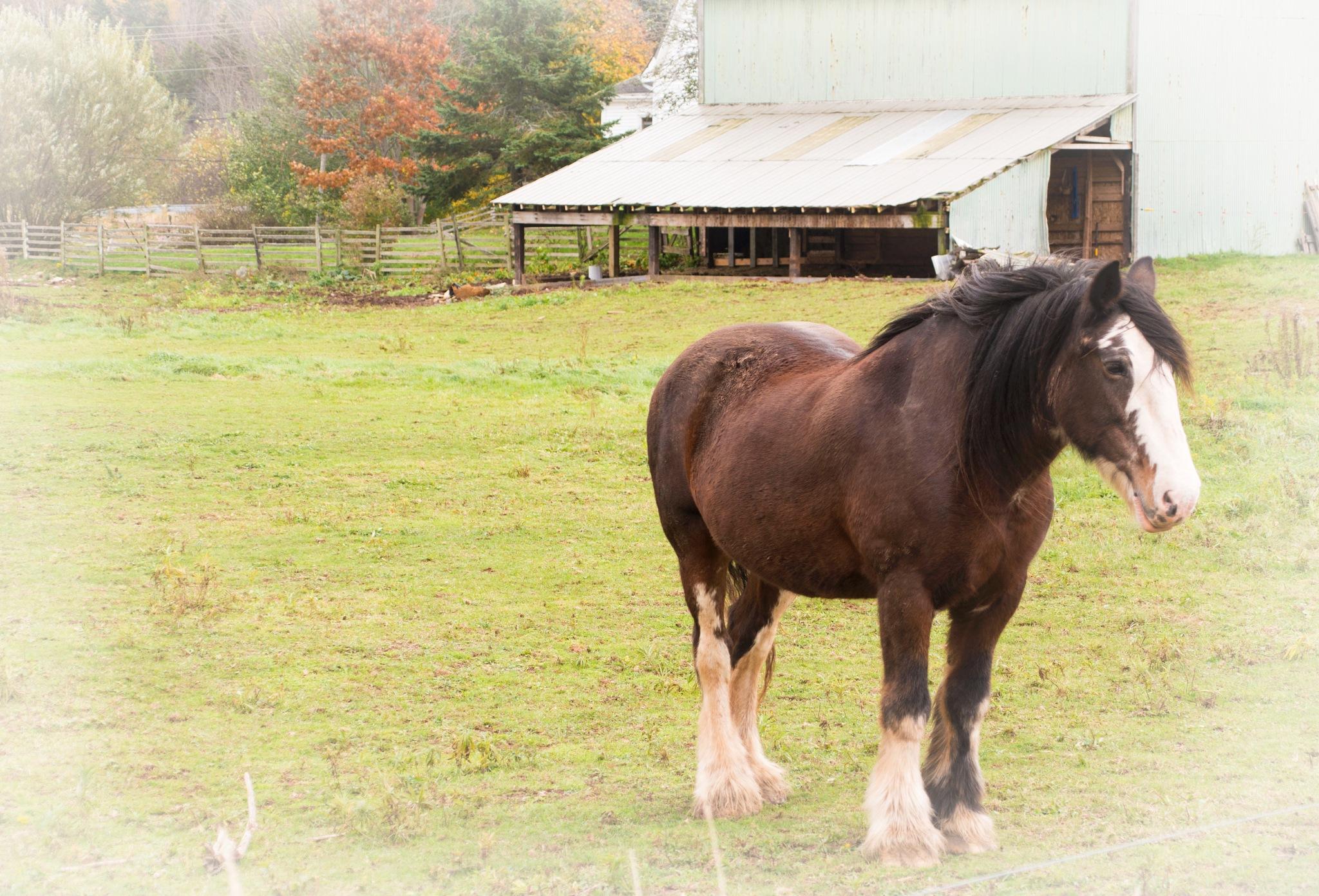 Draft Horse by Wayne L. Talbot