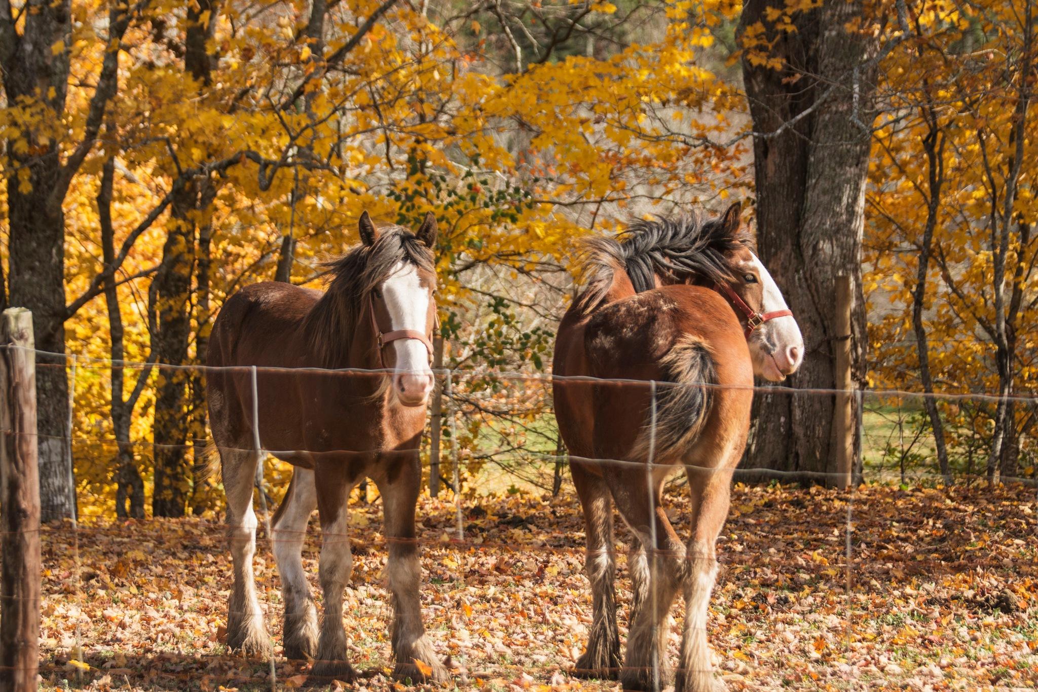 Enjoying the Last Days of Fall by Wayne L. Talbot