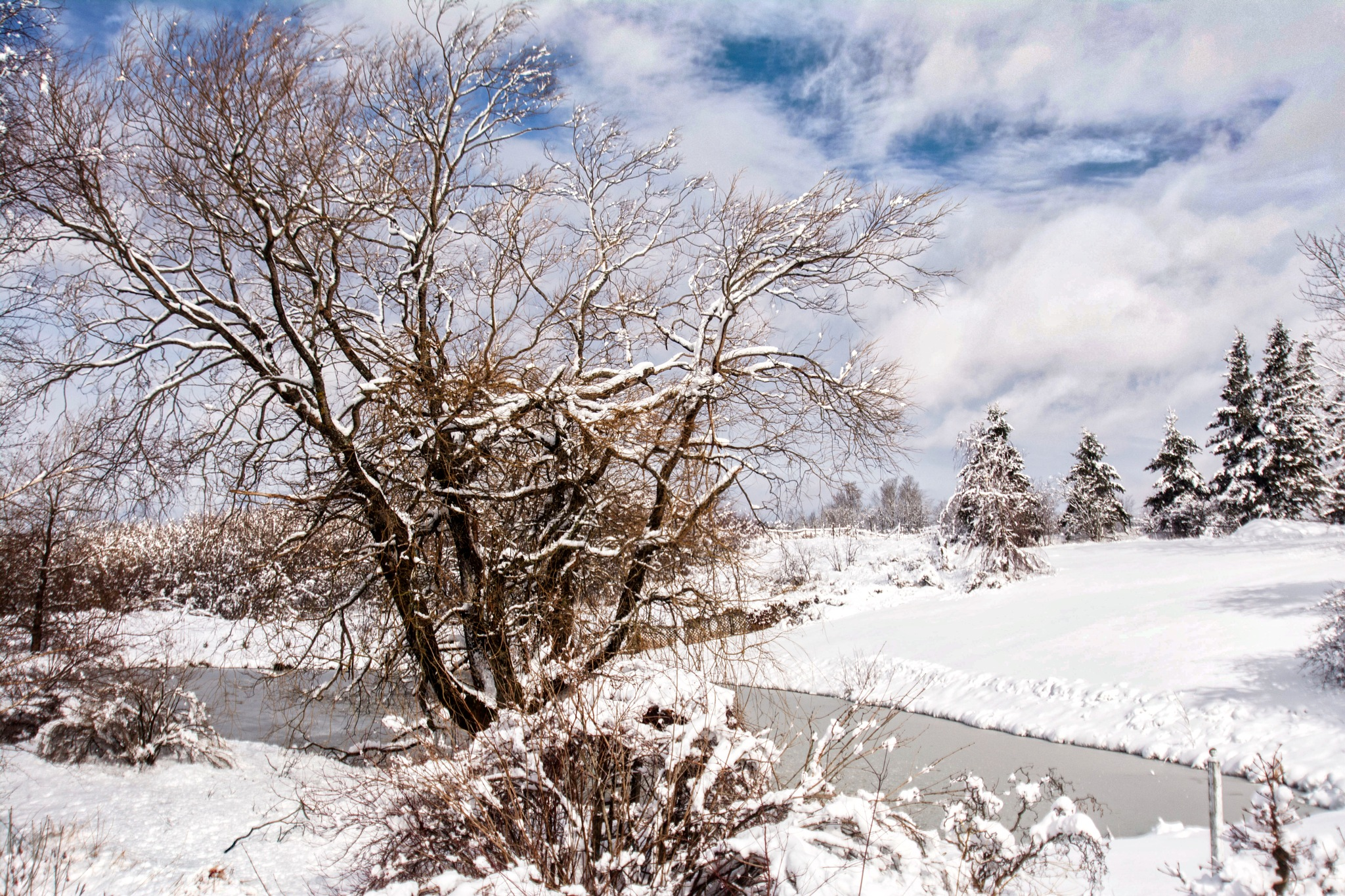 A Winter Scene  by Wayne L. Talbot