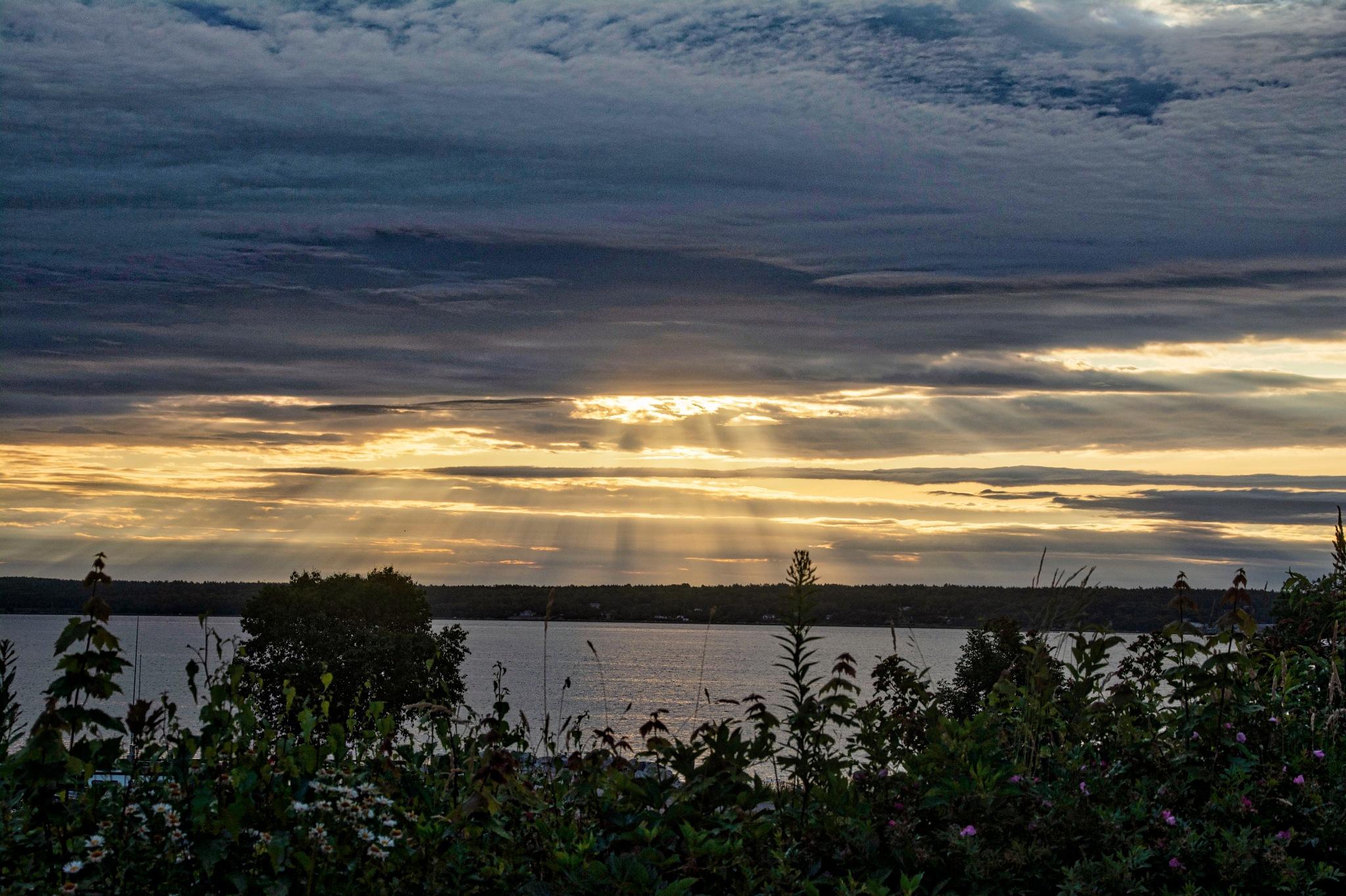 Golden Rays by Wayne L. Talbot