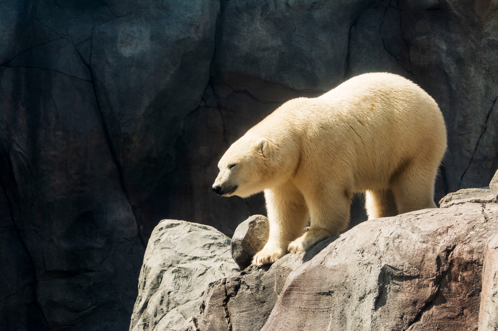 Polar Bear II by Wayne L. Talbot