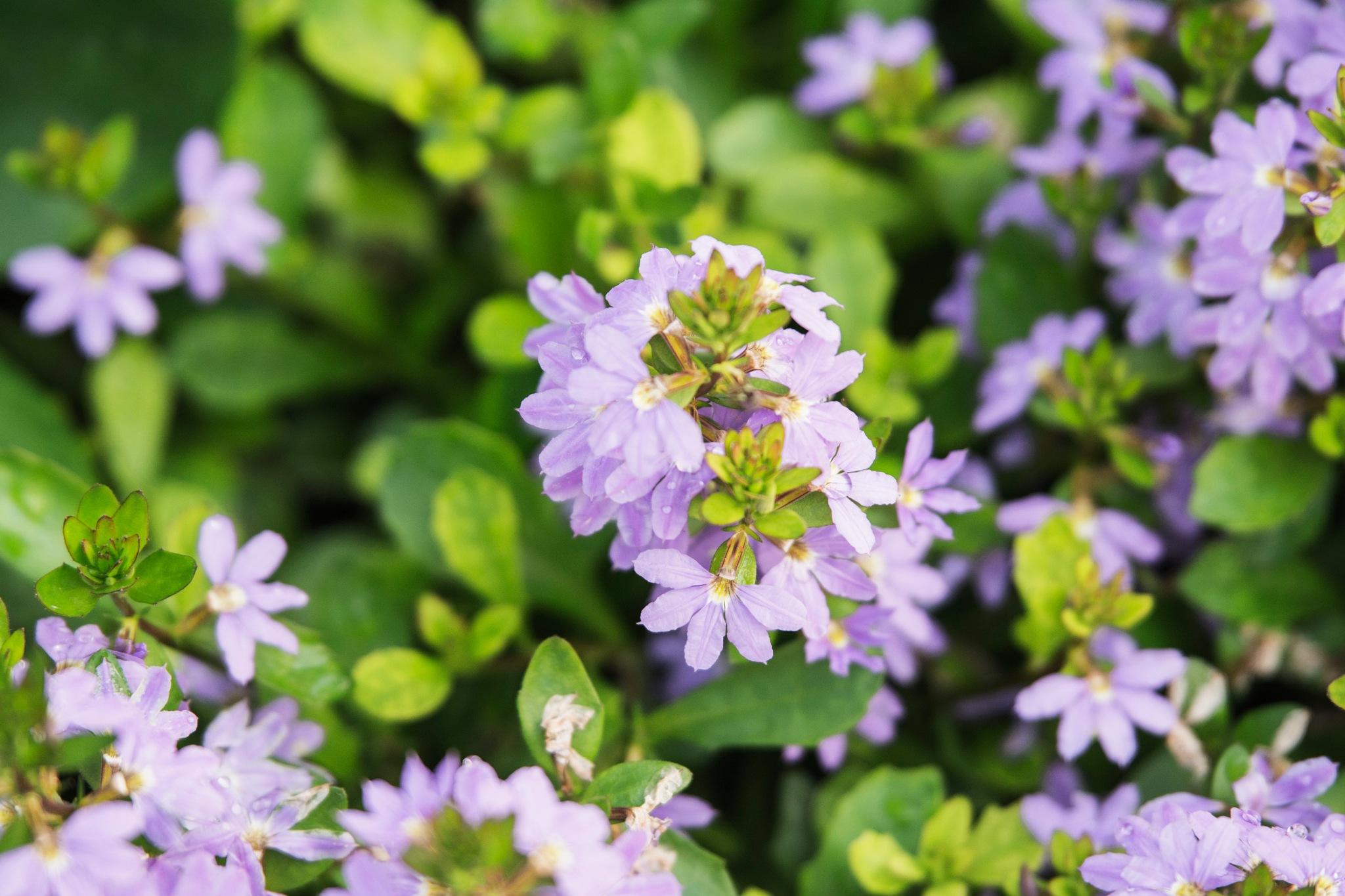 Little Purple Flowers by Wayne L. Talbot