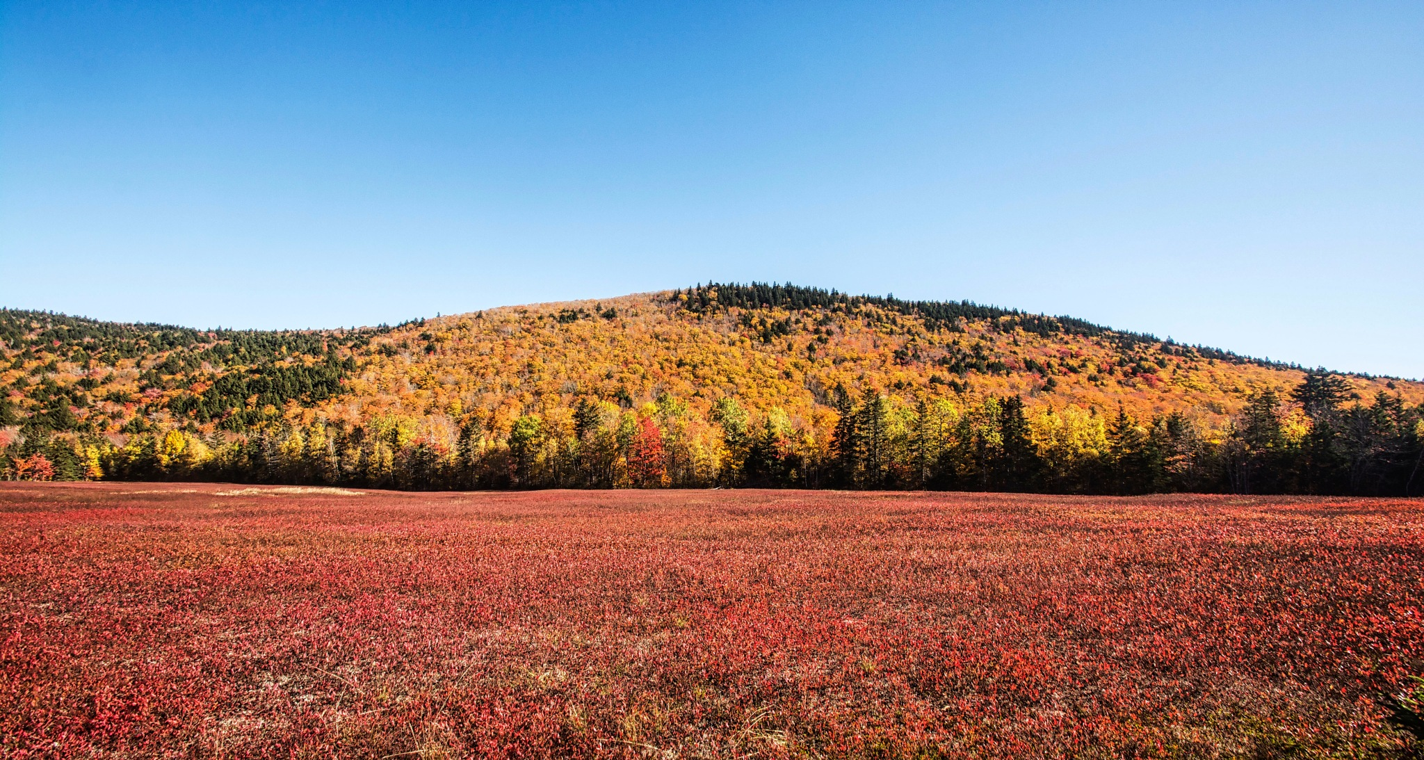 Colour in the Field & in the Mountain  by Wayne L. Talbot