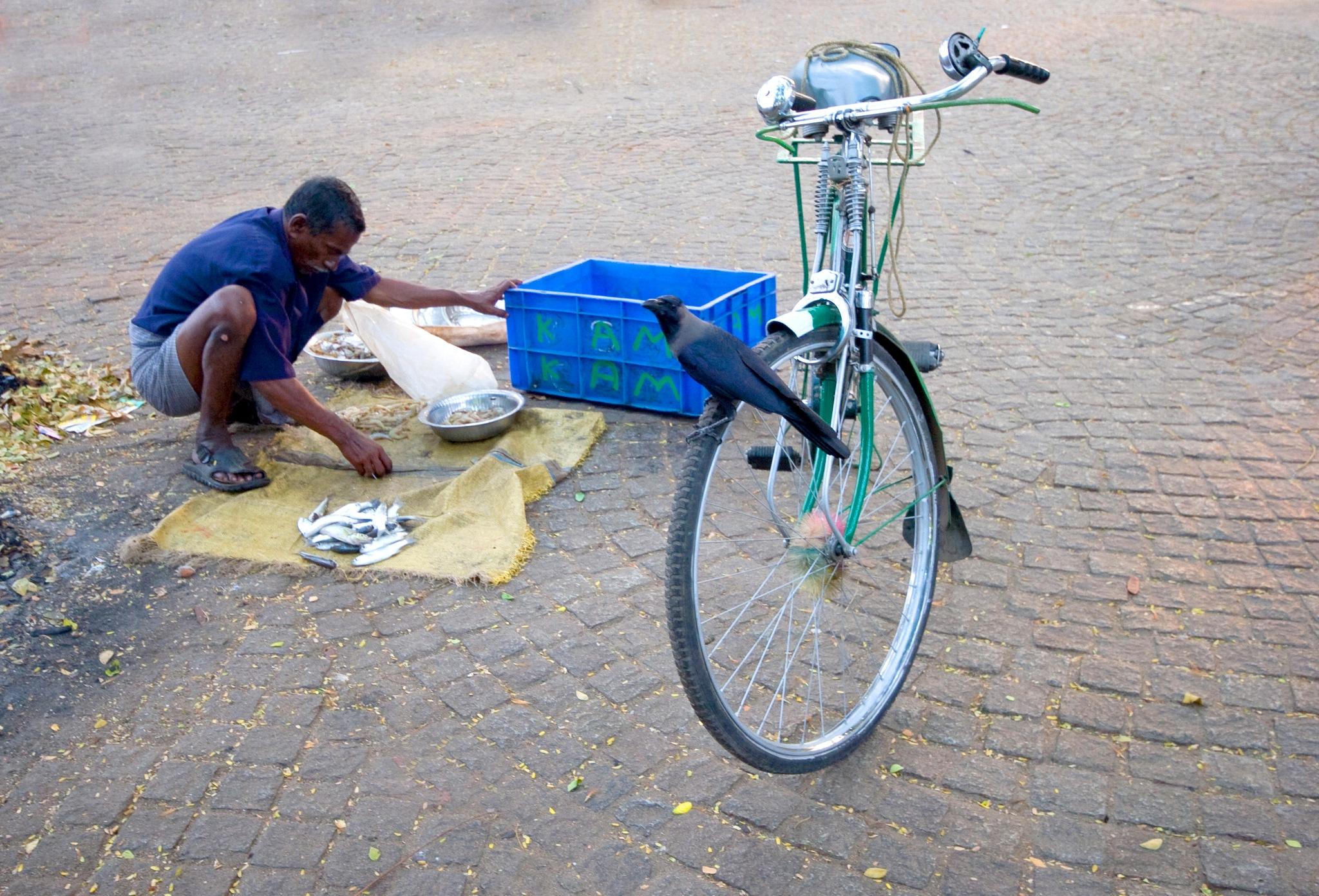 Kochi - south India 5 by  Itzkovich  Joseph